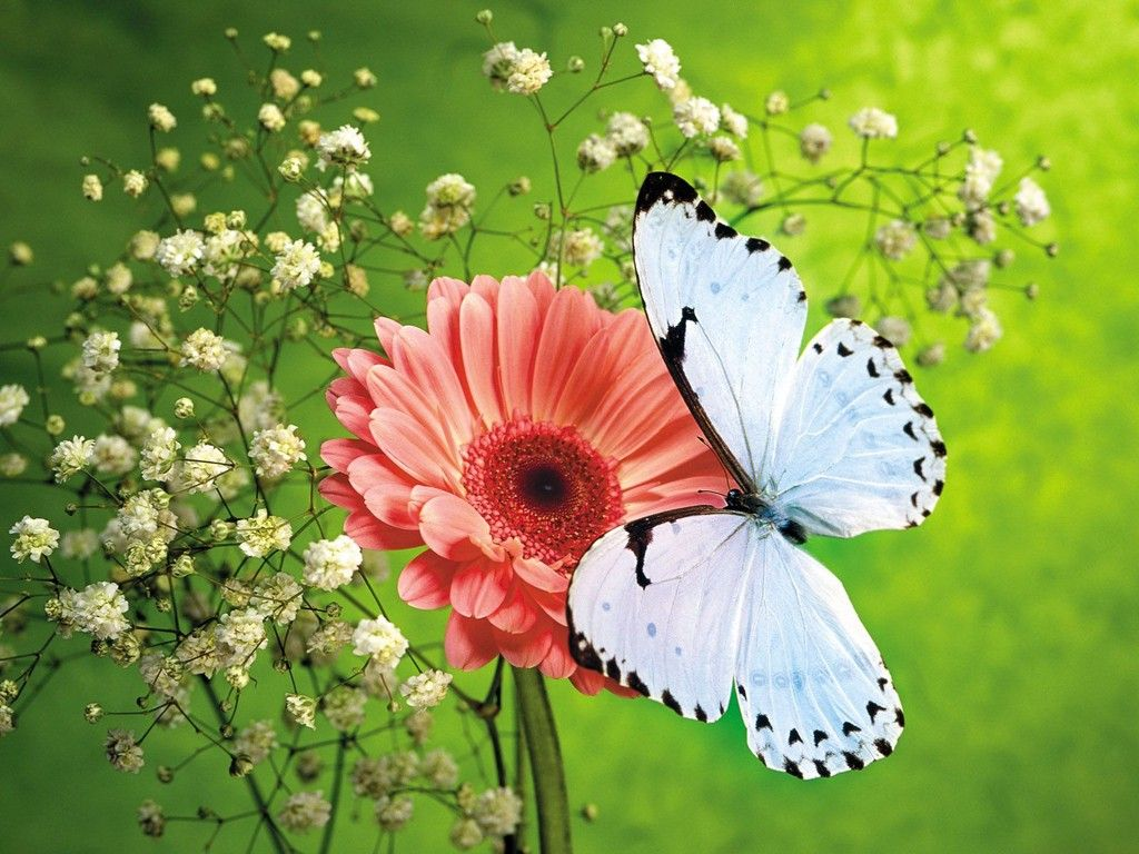 71 Best Free Animated Butterfly Wallpapers Wallpaperaccess