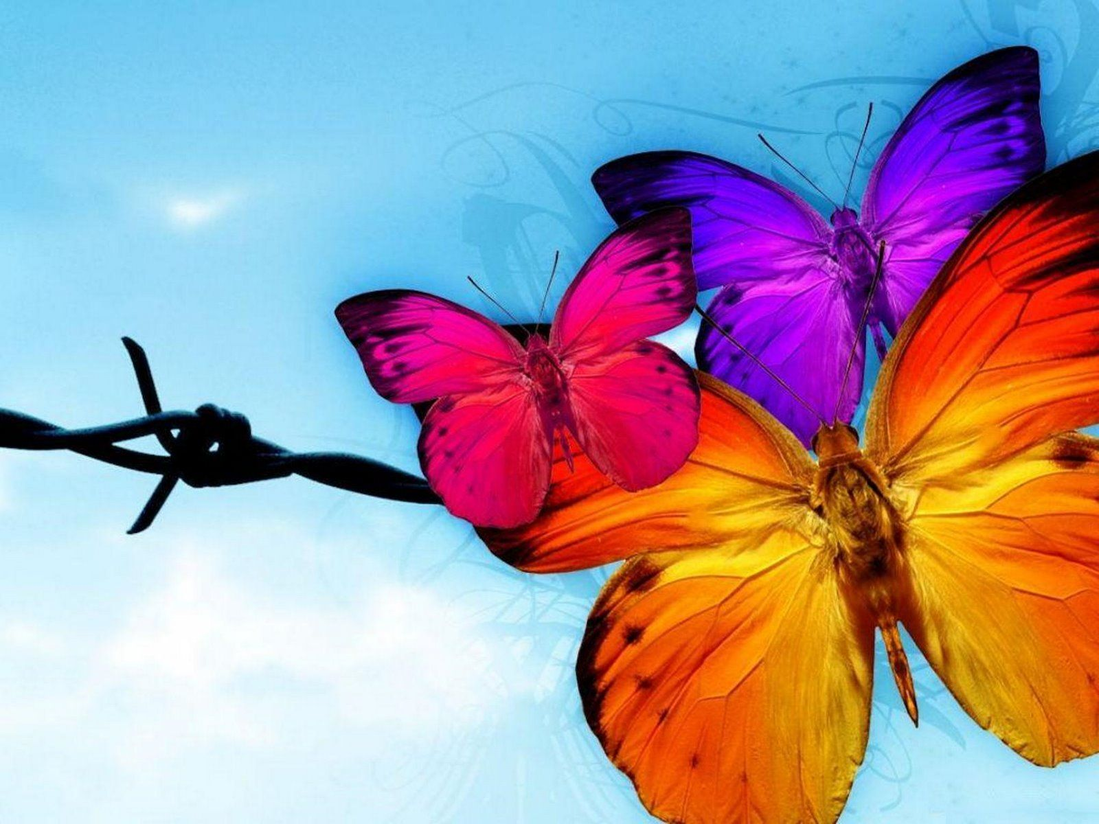 Animated Butterfly Wallpapers - Top Free Animated Butterfly