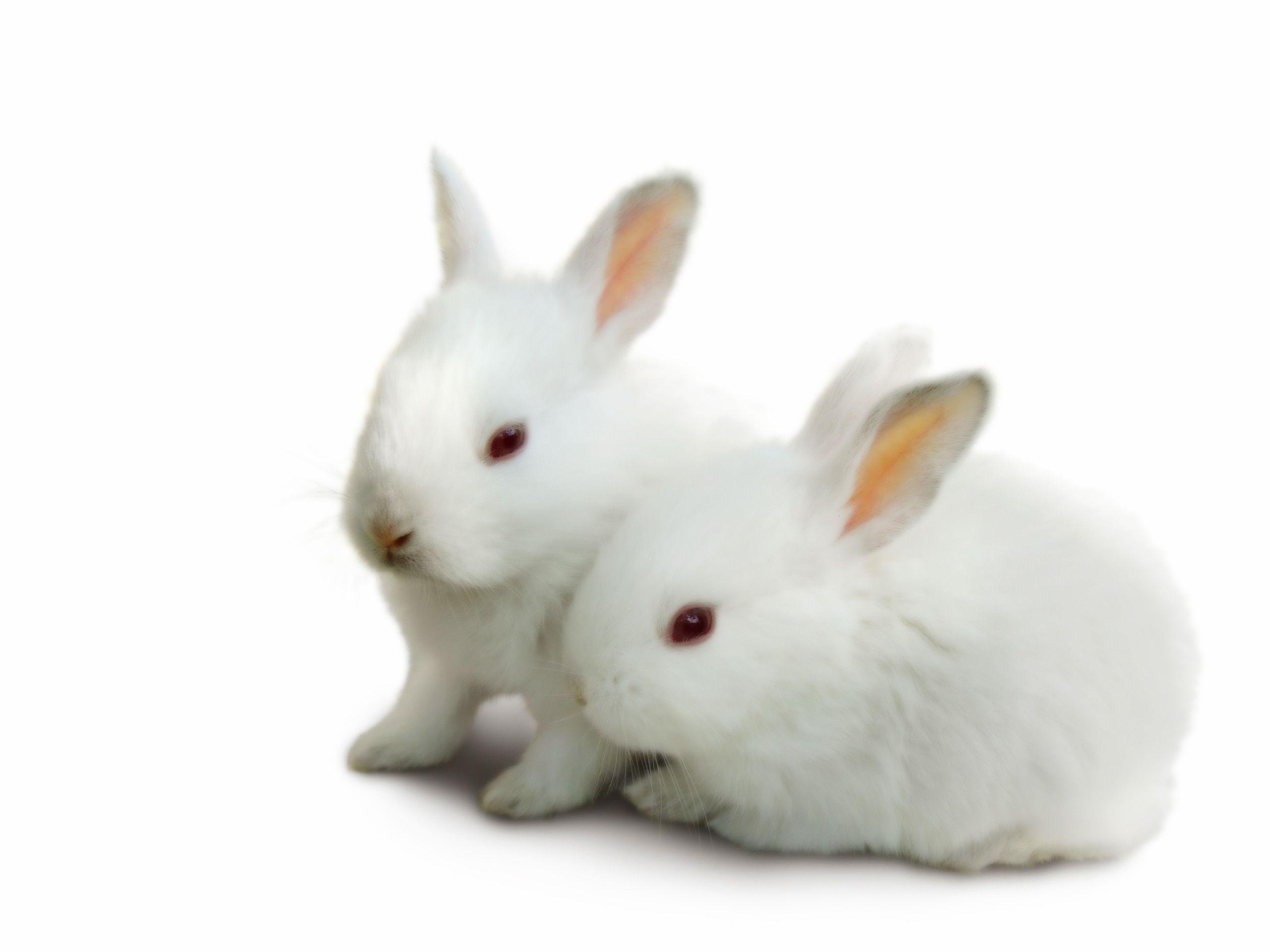 Cute Cartoon Bunny Wallpapers Top Free Cute Cartoon Bunny