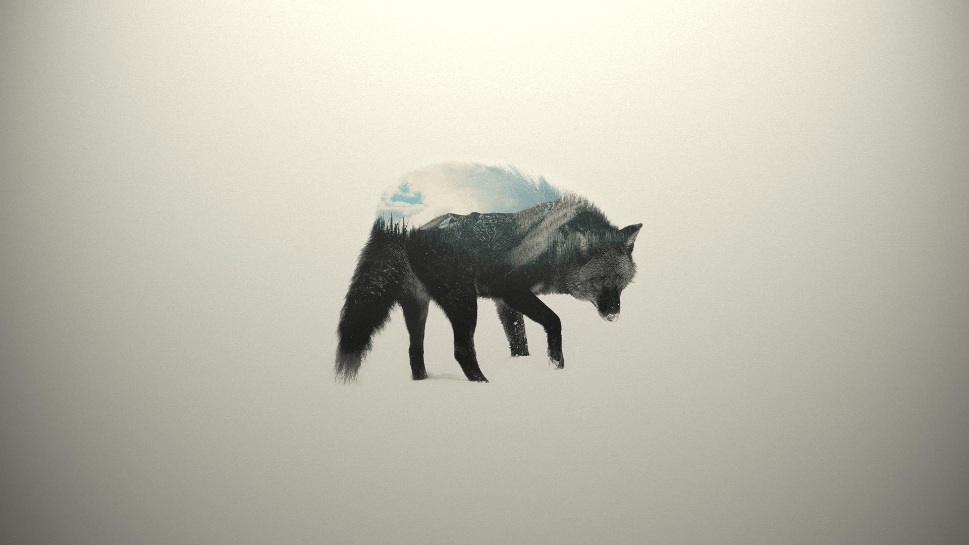 Minimalist Animal Wallpapers Top Free Minimalist Animal