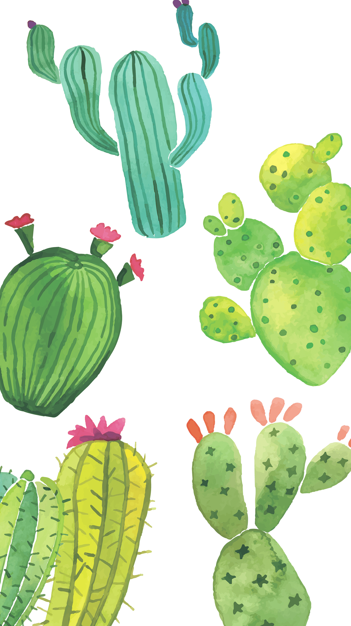 Cute Cactus Wallpapers Top Free Cute Cactus Backgrounds