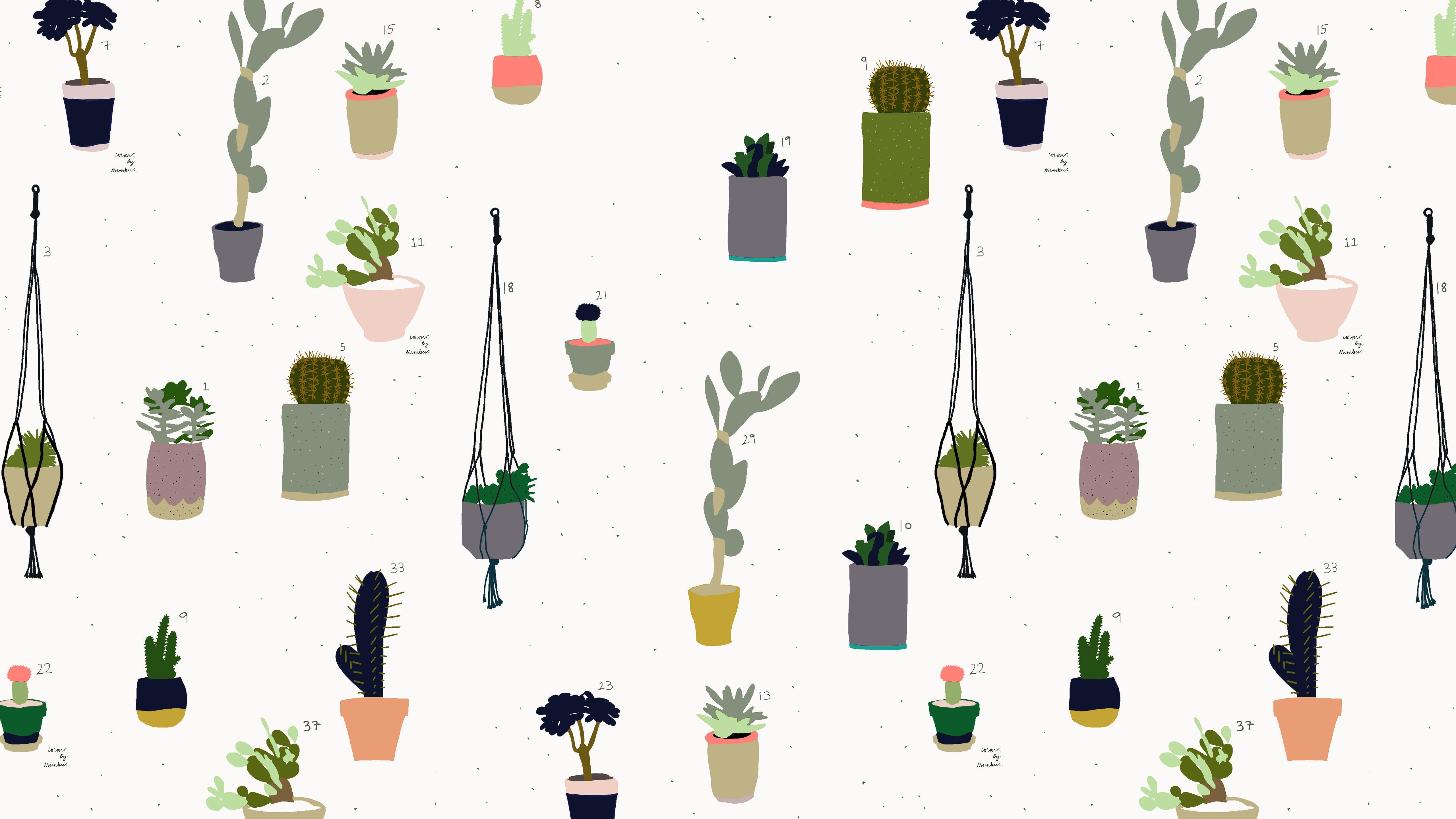 Cactus Wallpapers Top Free Cactus Backgrounds Wallpaperaccess