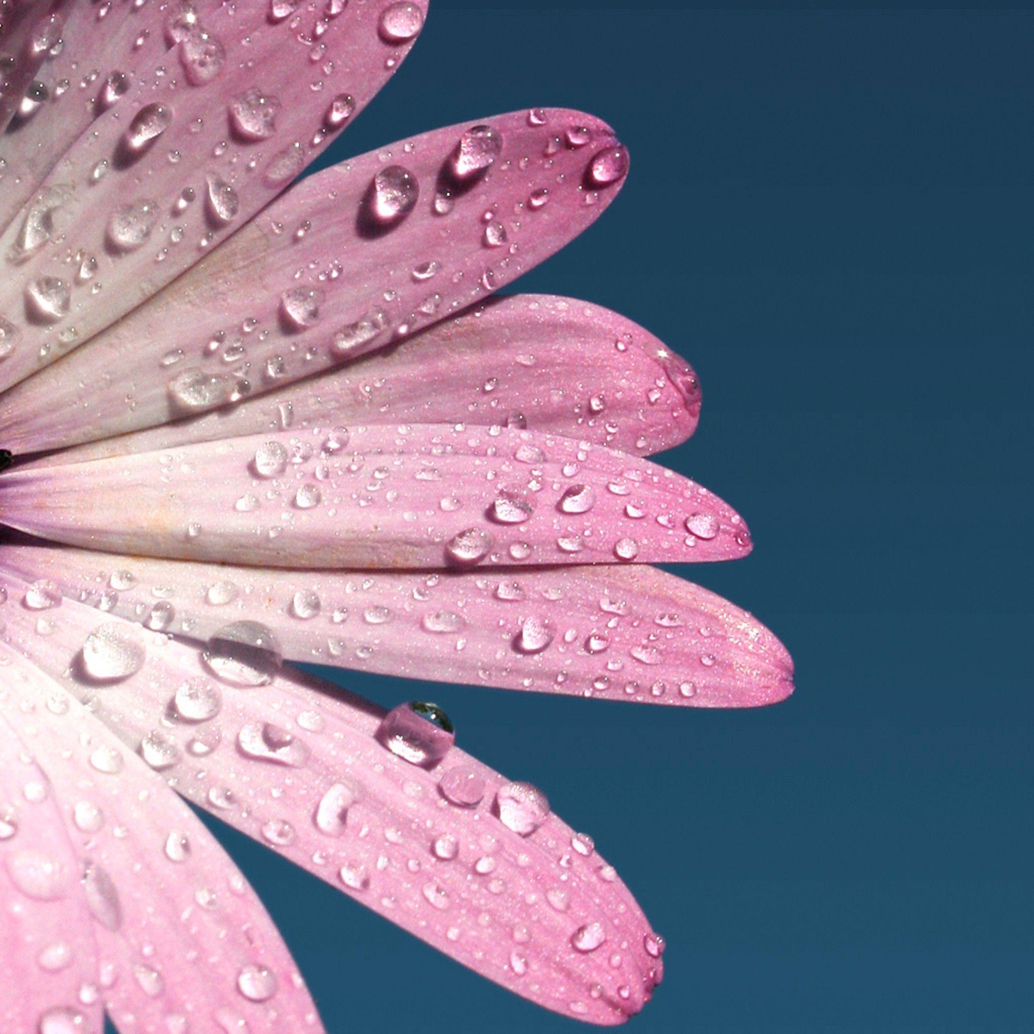 Hình nền 2048x2048 Cuối tuần: Giao hoa cho iPad của bạn