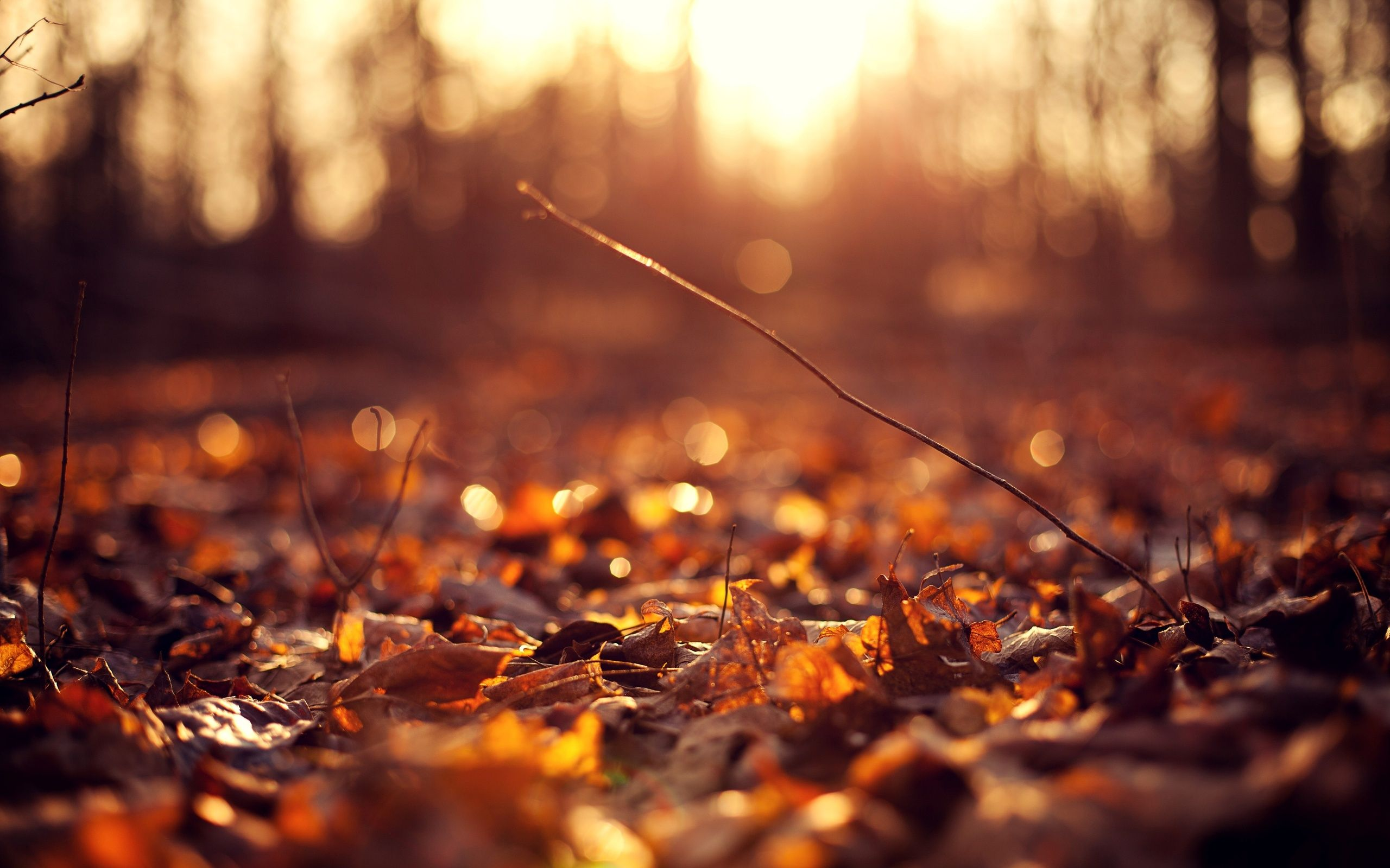 "1920x1080 Autumn wallpaper HD ·① Download free wallpapers for desktop, mobile ..."">"