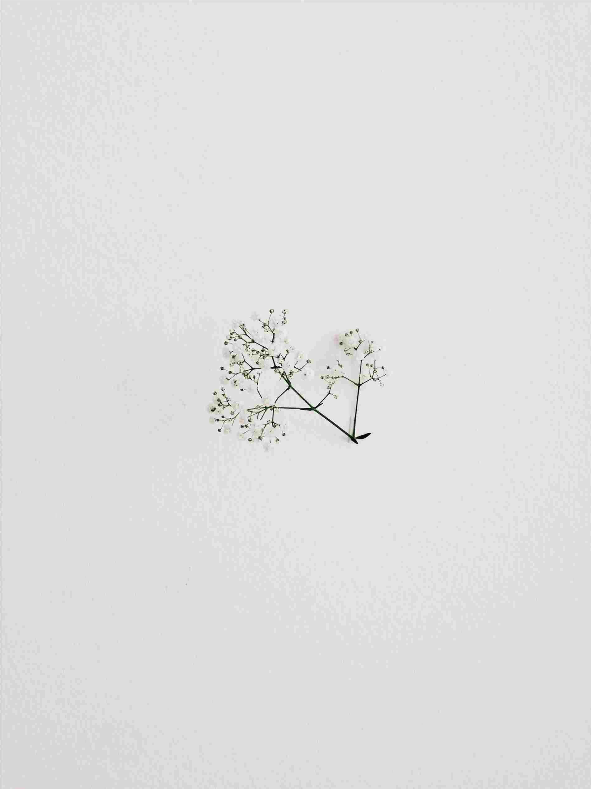 Minimalist Plant Drawing Wallpapers Top Free Minimalist Plant Drawing Backgrounds Wallpaperaccess