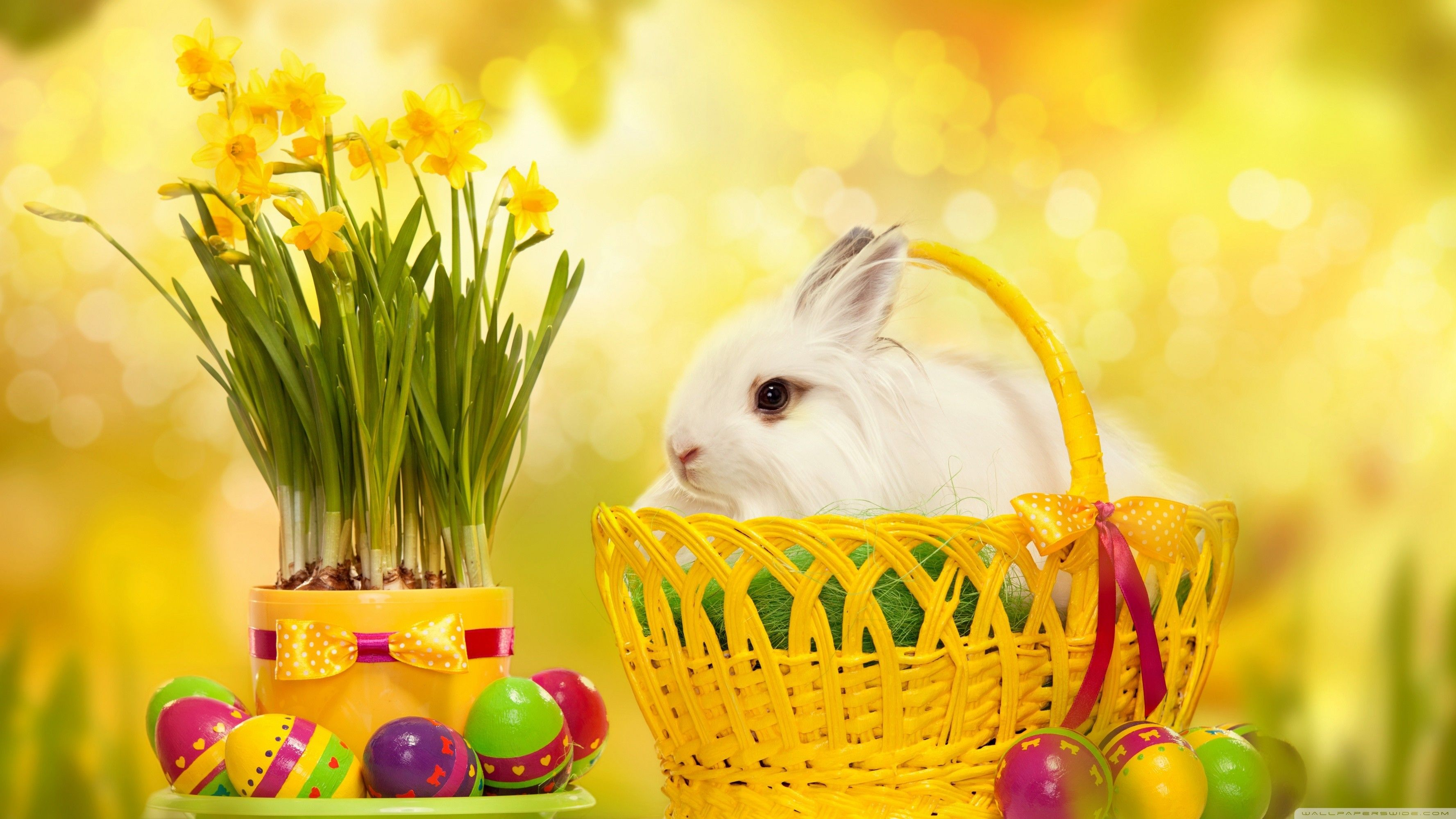 Cute Easter Wallpapers Top Free Cute Easter Backgrounds
