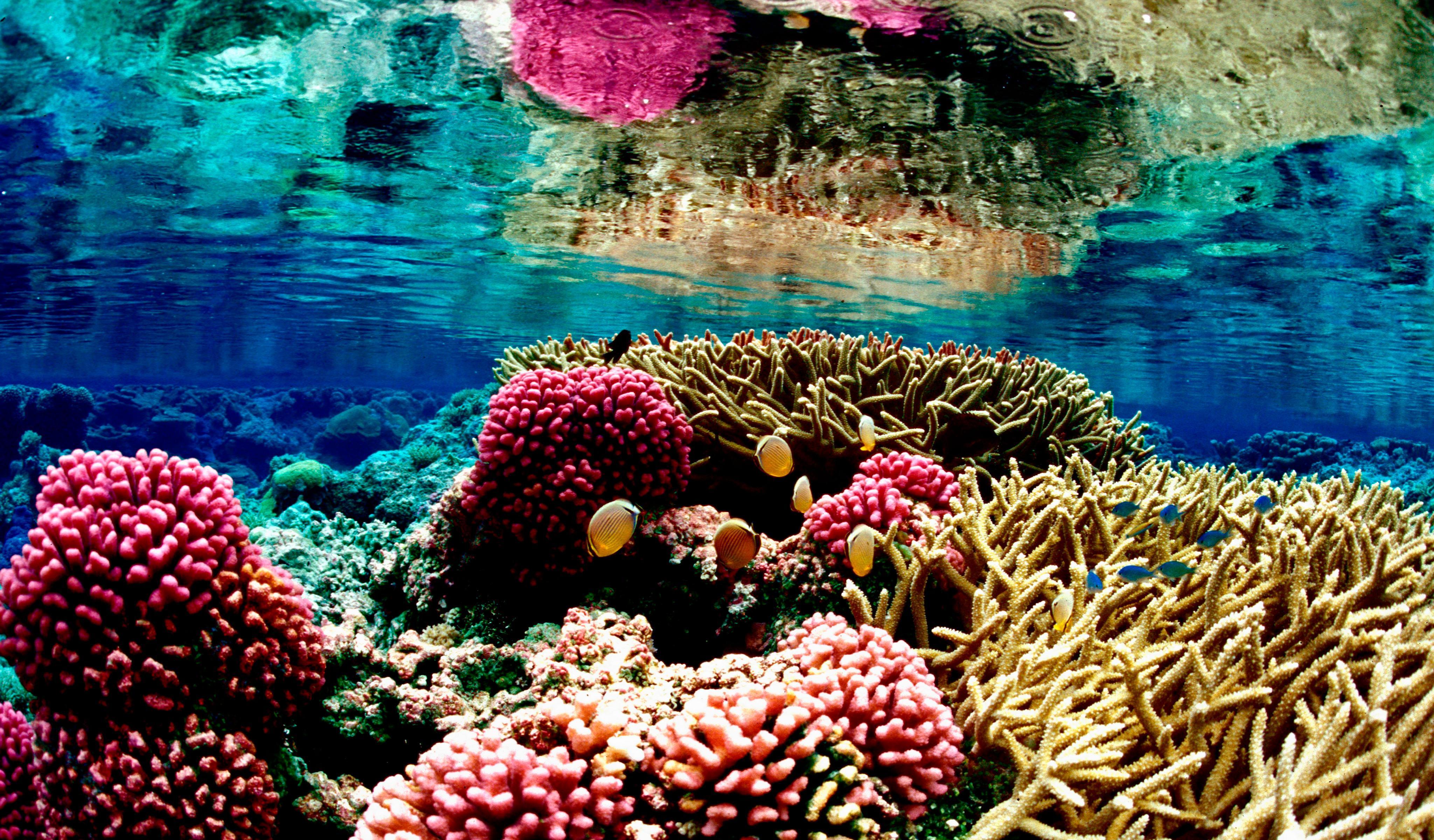 Coral Reef 4k Wallpapers Top Free Coral Reef 4k