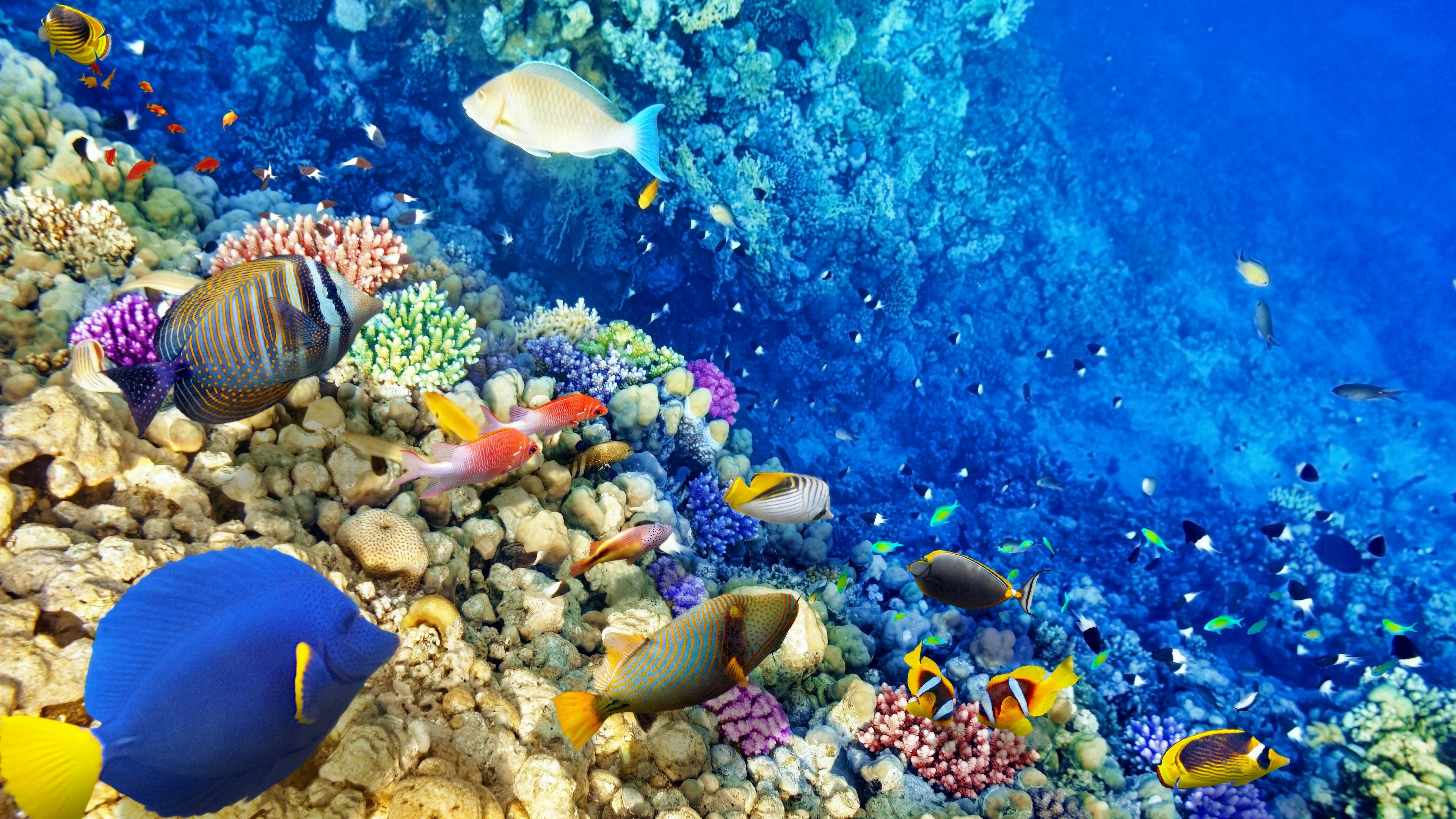 Coral Reef 4k Wallpapers Top Free Coral Reef 4k Backgrounds