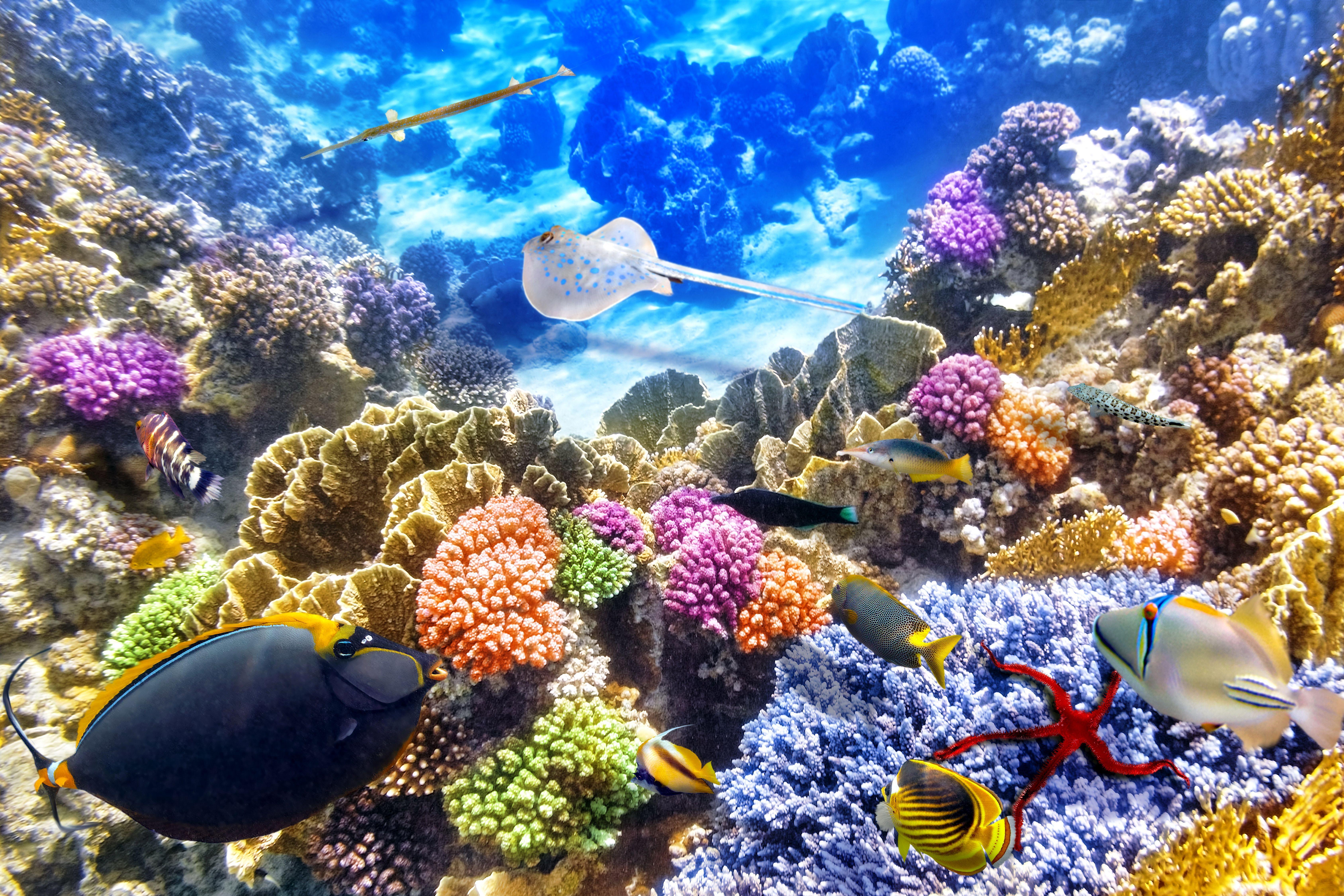 Coral Reef 4K Wallpapers - Top Free Coral Reef 4K ...