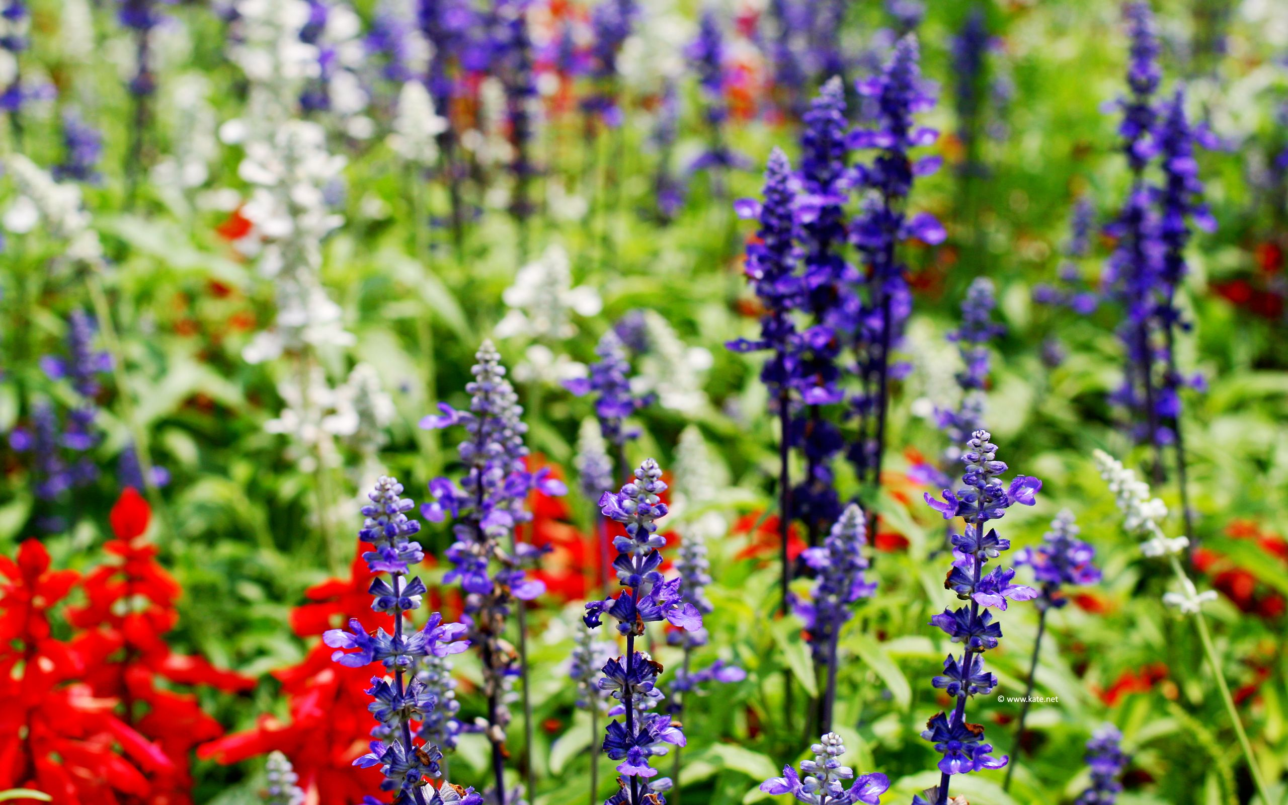 Red White And Blue Flowers Wallpapers Top Free Red White And Blue Flowers Backgrounds Wallpaperaccess