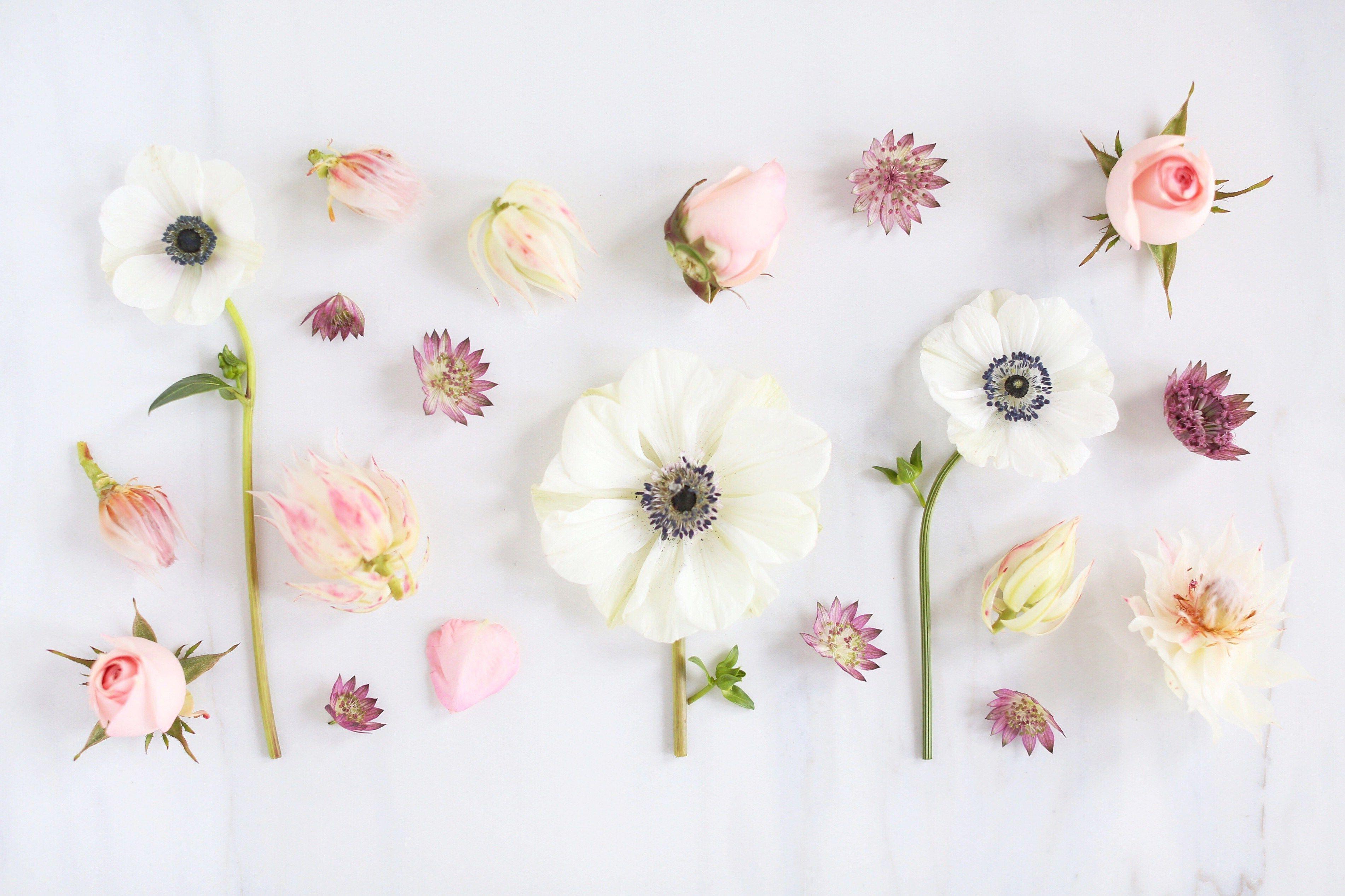 Aesthetic Flower Desktop Wallpapers Top Free Aesthetic Flower Desktop Backgrounds Wallpaperaccess