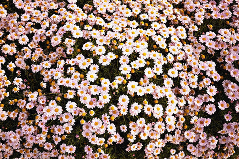 Aesthetic Flower Desktop Wallpapers Top Free Aesthetic Flower