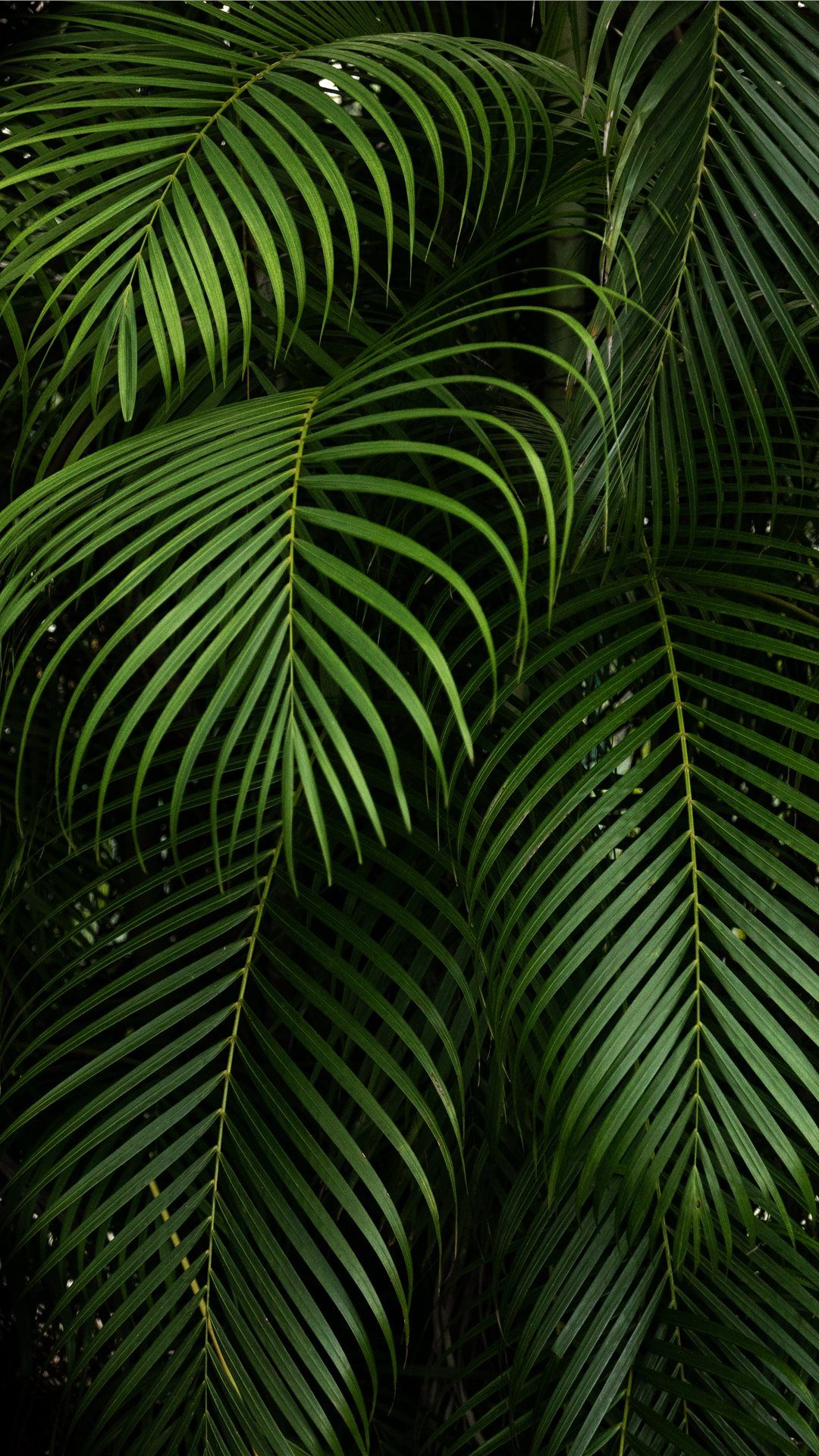 Jungle Iphone Wallpapers Top Free Jungle Iphone Backgrounds Wallpaperaccess