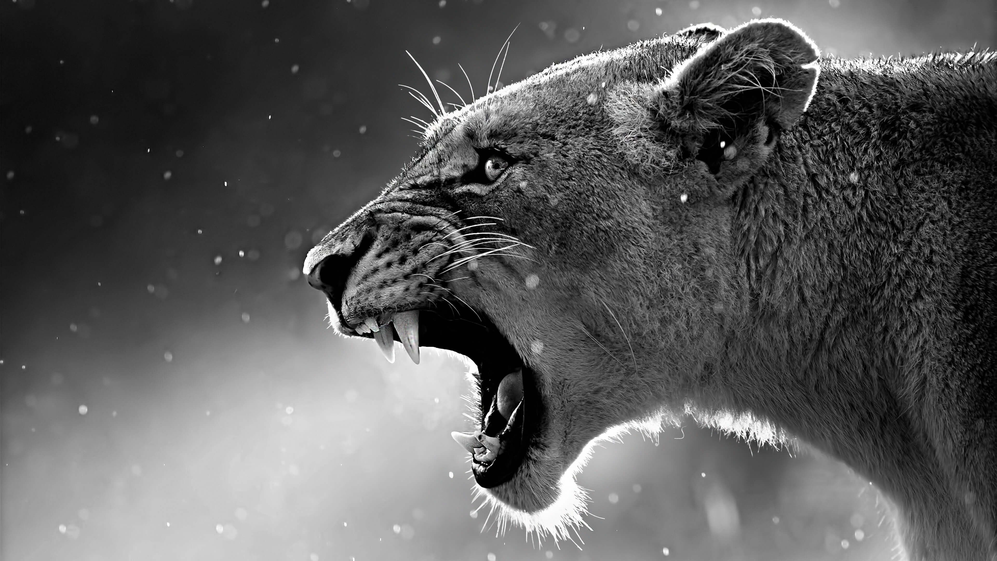 3840x2160 126 4K Ultra HD Lion Wallpapers | Background Images - Wallpaper Abyss