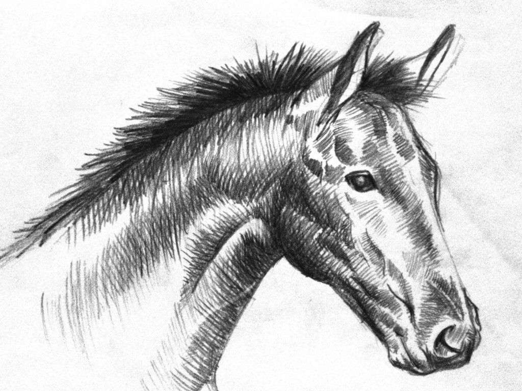 Horse Drawing Wallpapers Top Free Horse Drawing Backgrounds Wallpaperaccess