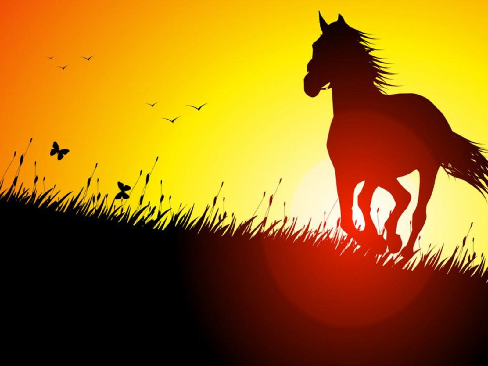 Horse Drawing Wallpapers Top Free Horse Drawing Backgrounds