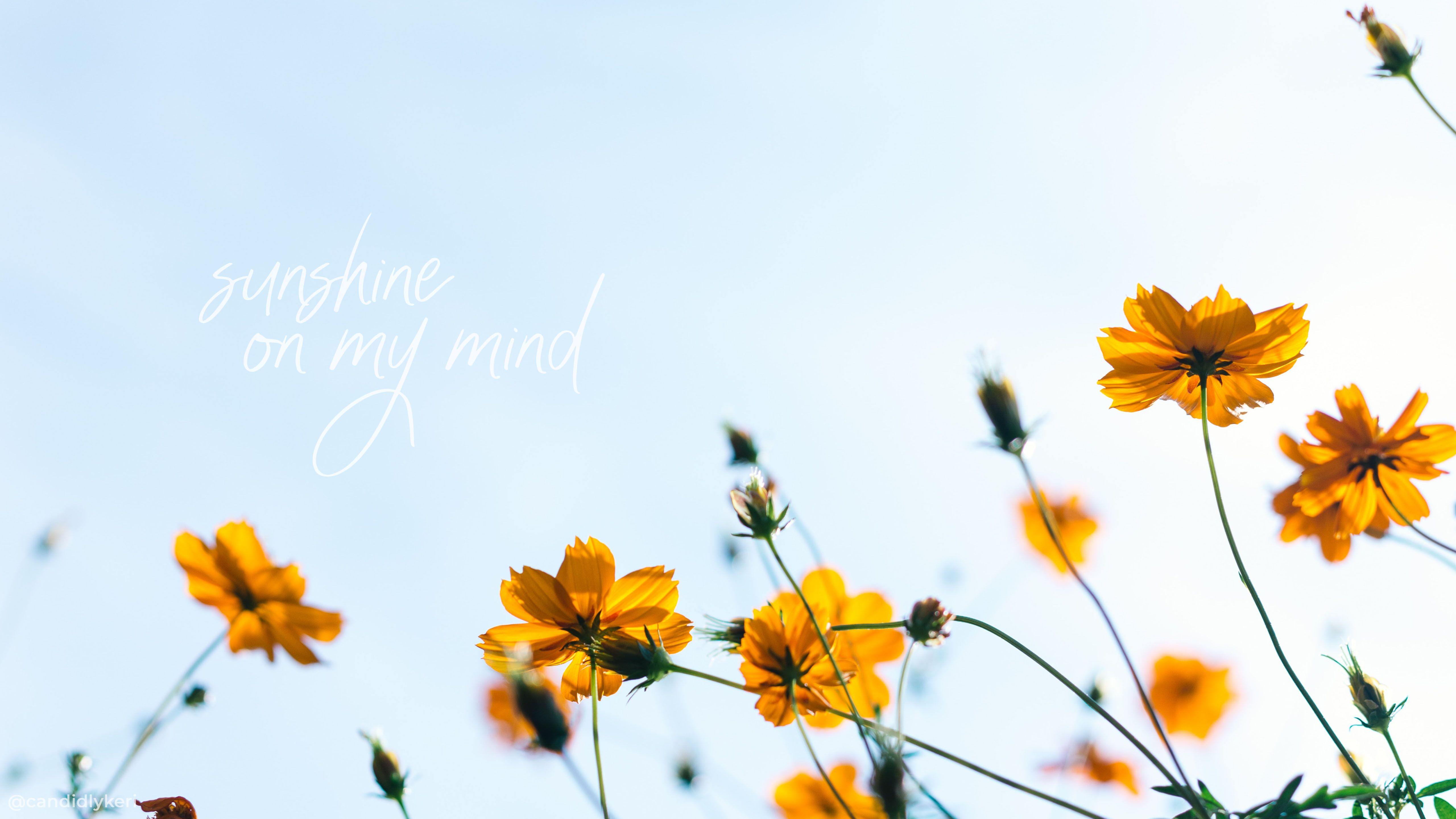 Yellow Flower Aesthetic Computer Wallpapers Top Free Yellow