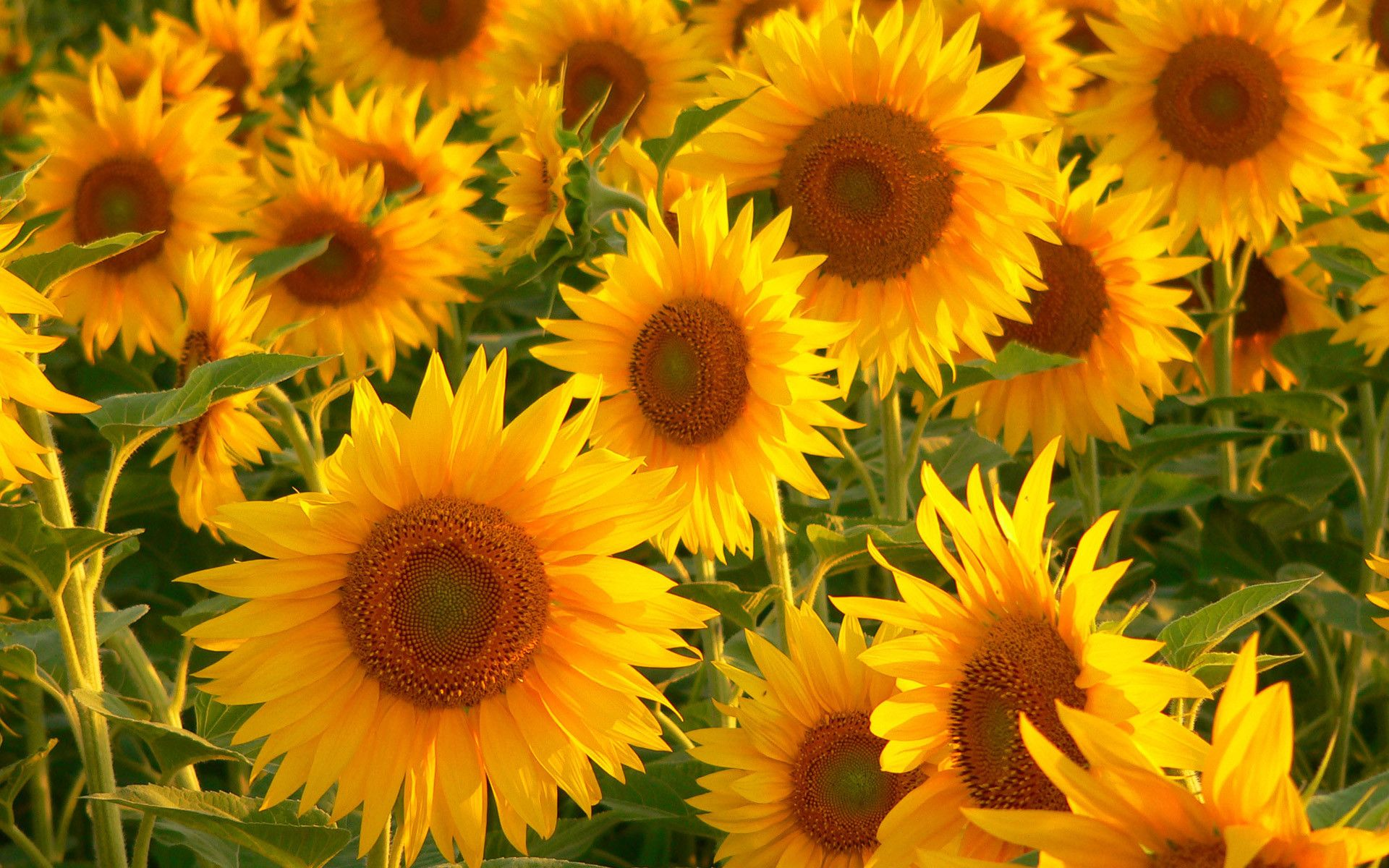 Yellow Flower Aesthetic Computer Wallpapers - Top Free ...