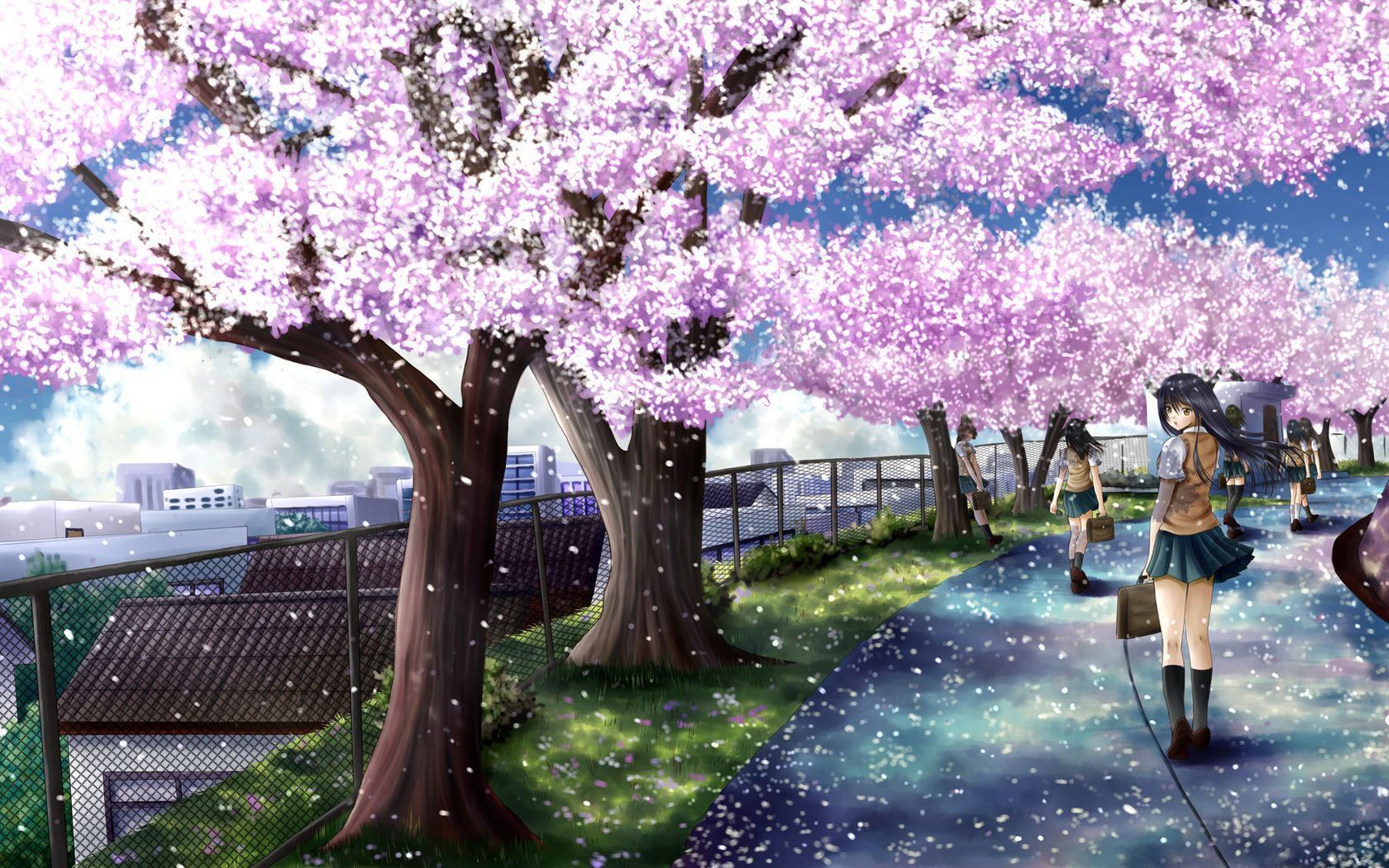 Cherry Blossoms Anime Scenery Wallpapers Top Free Cherry Blossoms