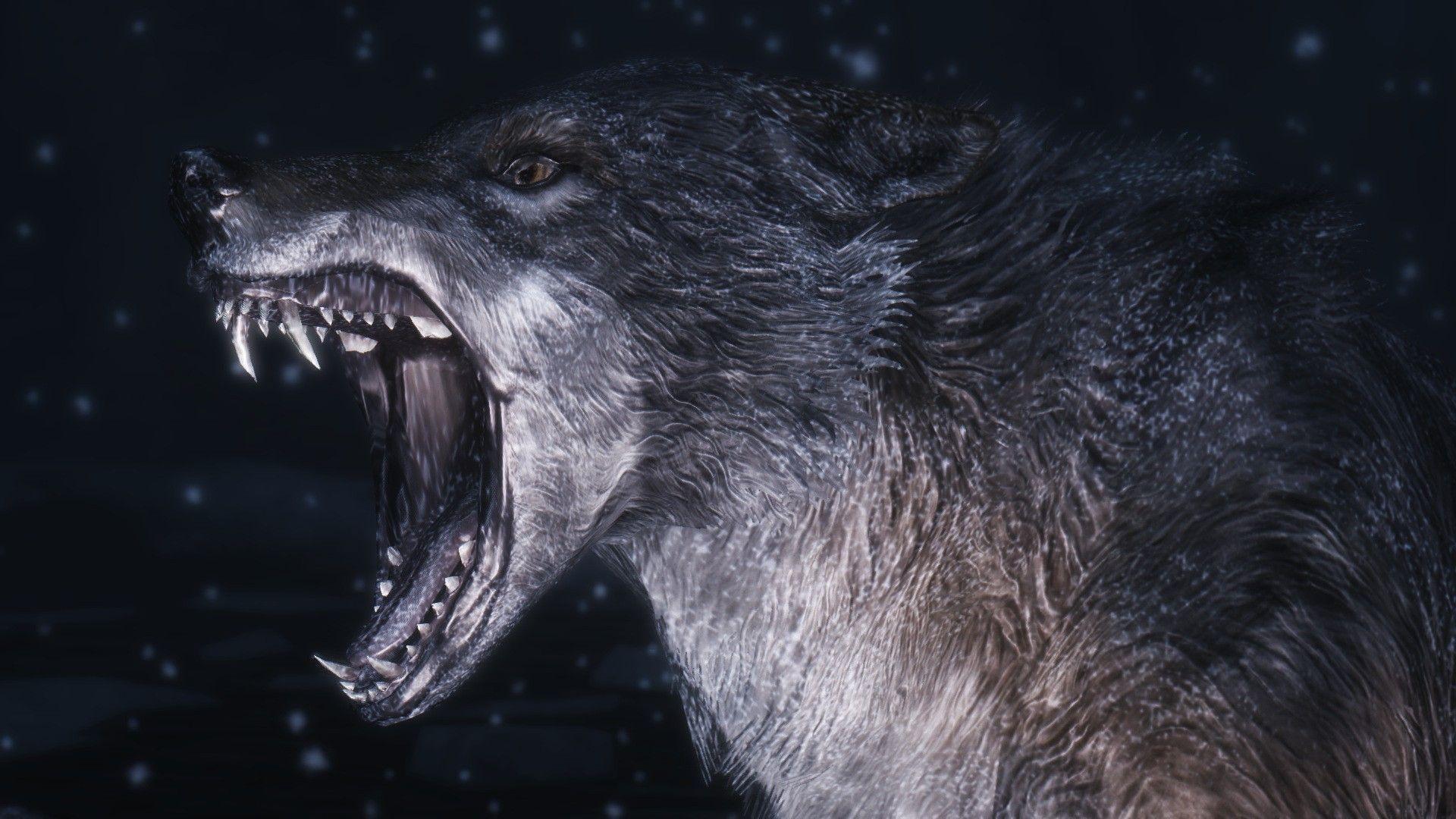 1920x1080 Teen Wolf Wallpaper Desktop.  Hình nền HD.  chó sói