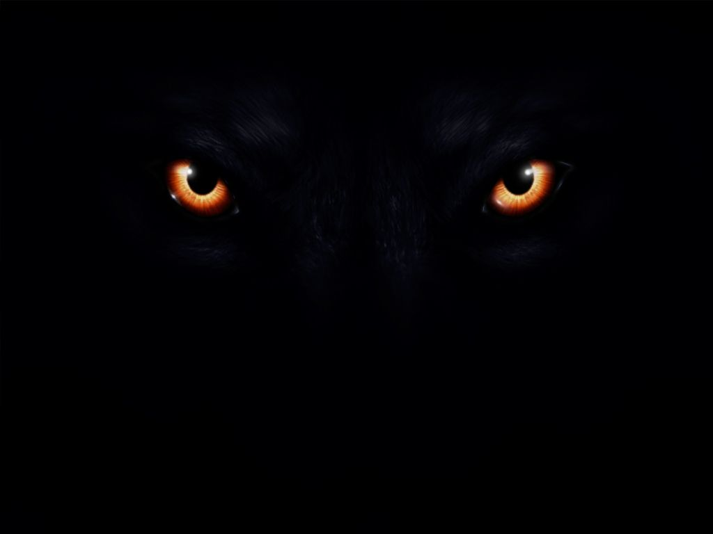 Evil eyes in the dark-6578