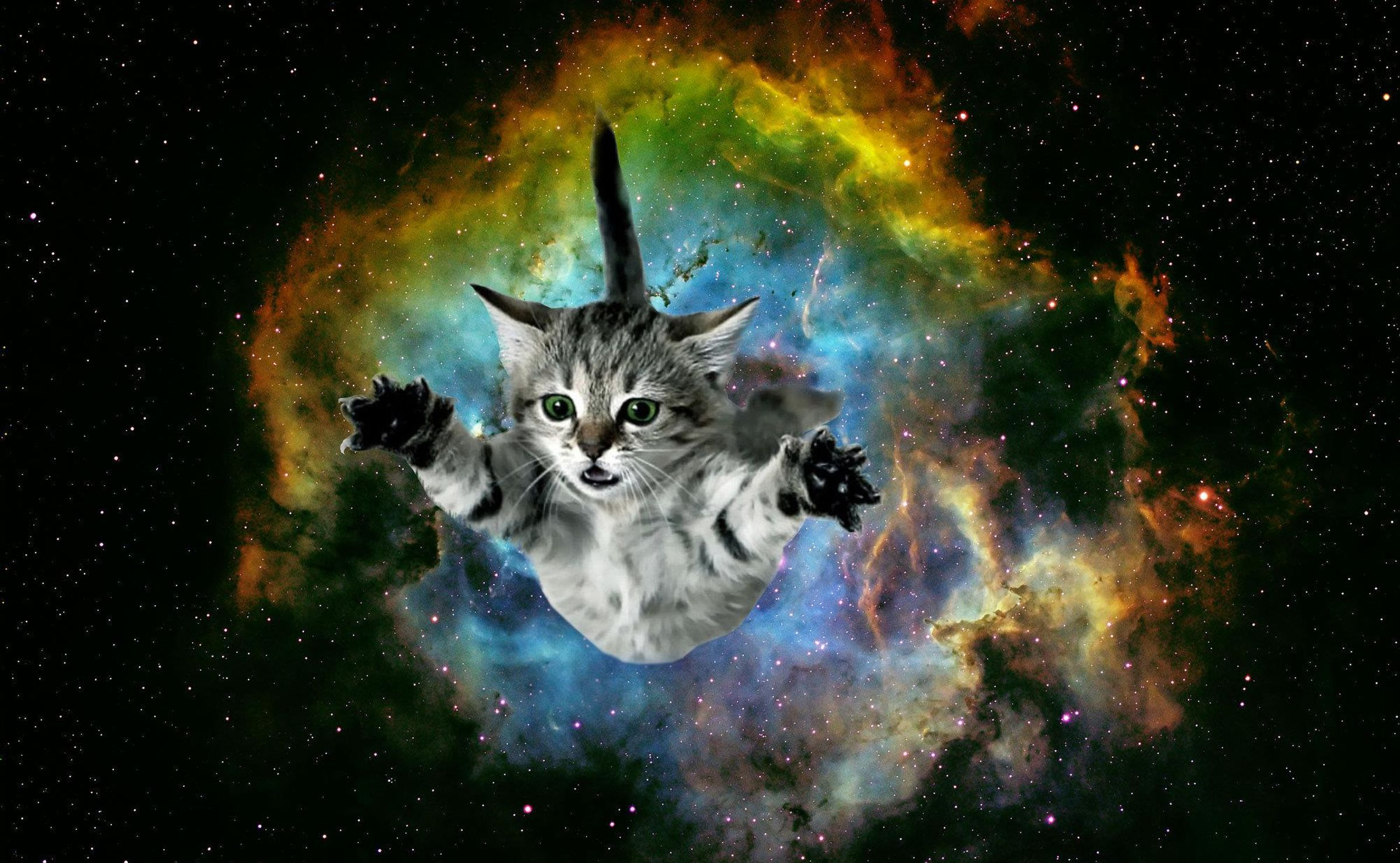 Galaxy Cat Wallpapers Top Free Galaxy Cat Backgrounds Wallpaperaccess