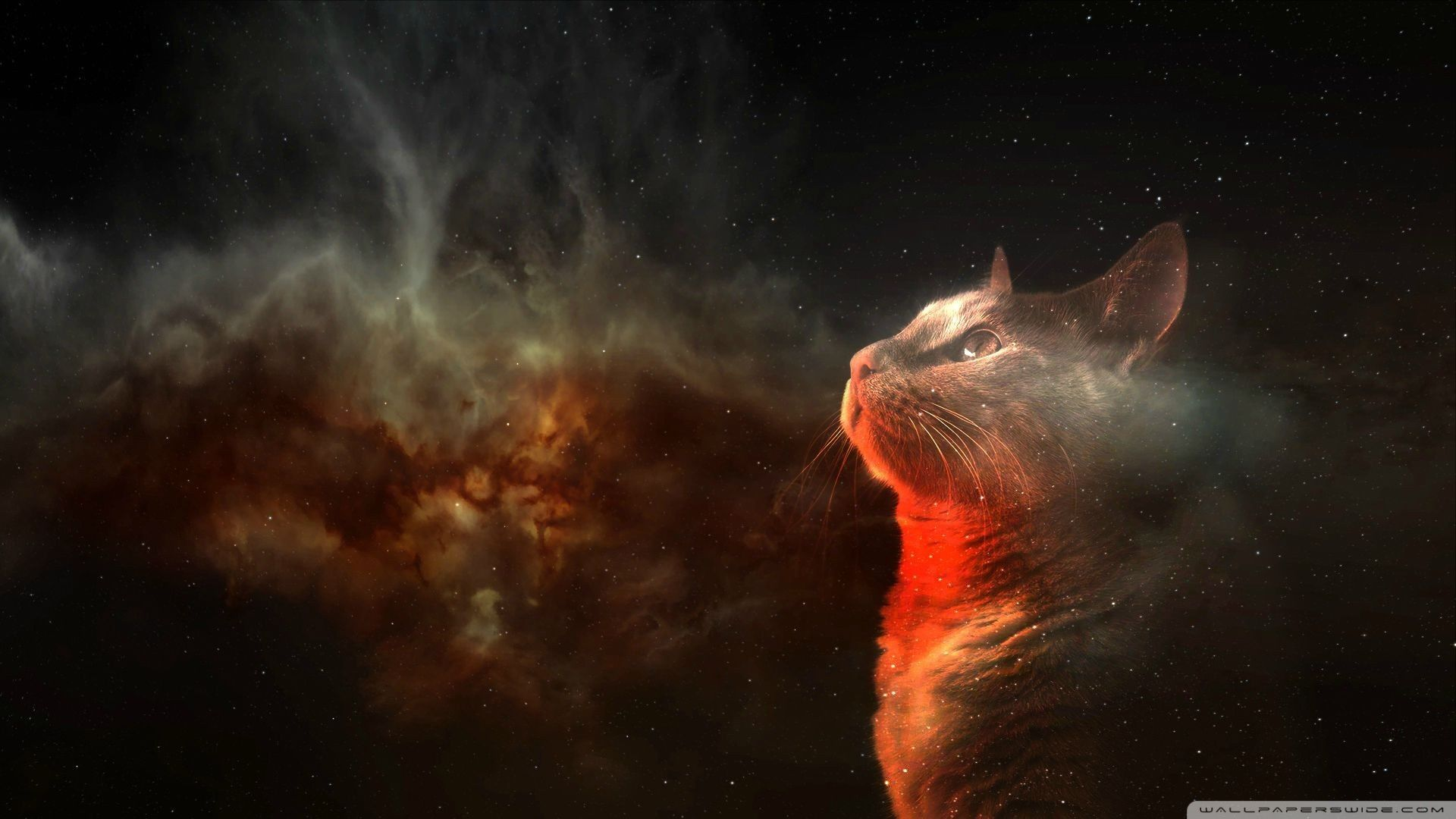 The Gerald Facebook Source Tacos Wallpaper Society6 Space Cat Source · Galaxy Cat Wallpapers Top Free Galaxy Cat Backgrounds