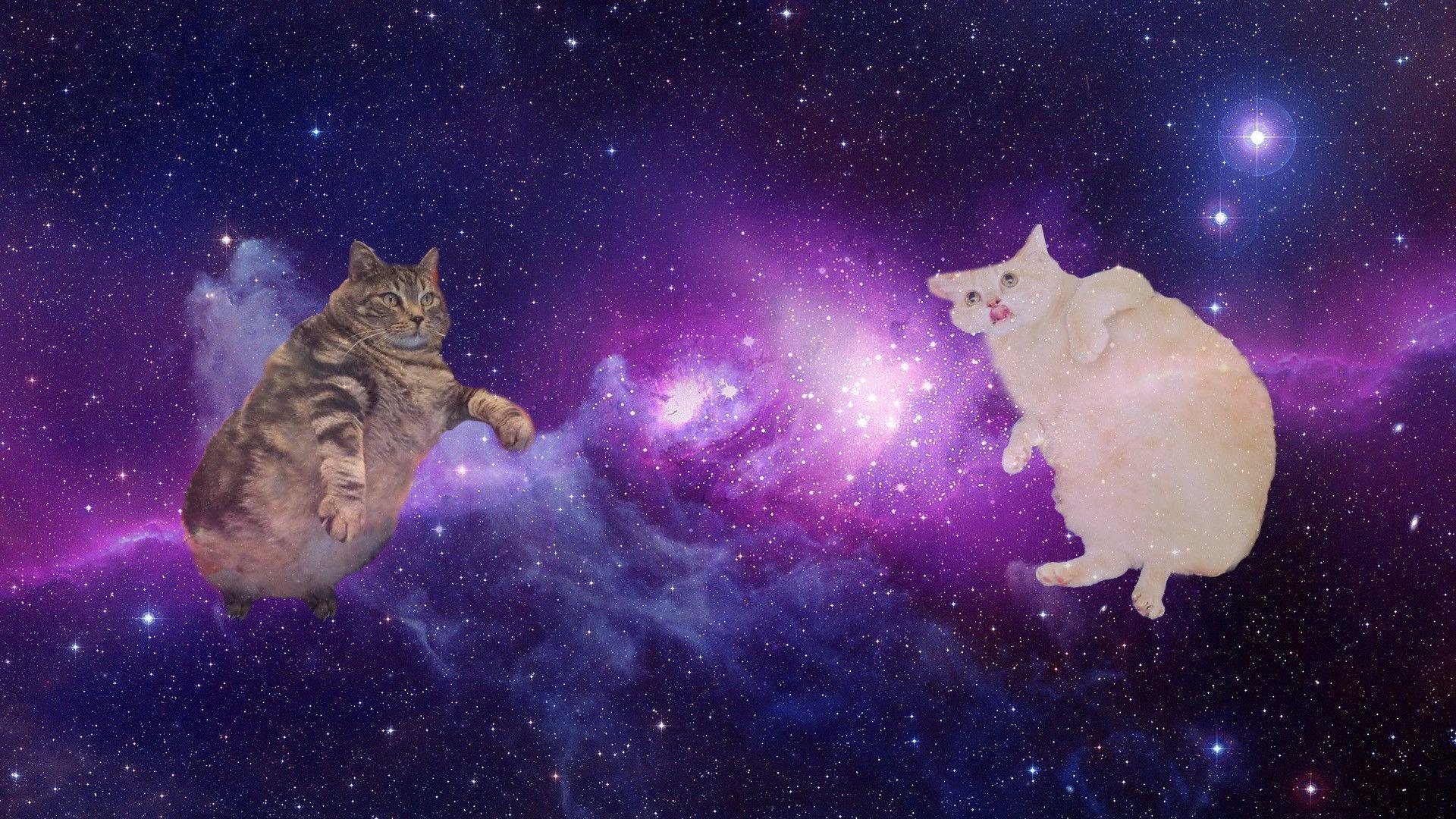 67 Best Free Galaxy Cat Wallpapers Wallpaperaccess