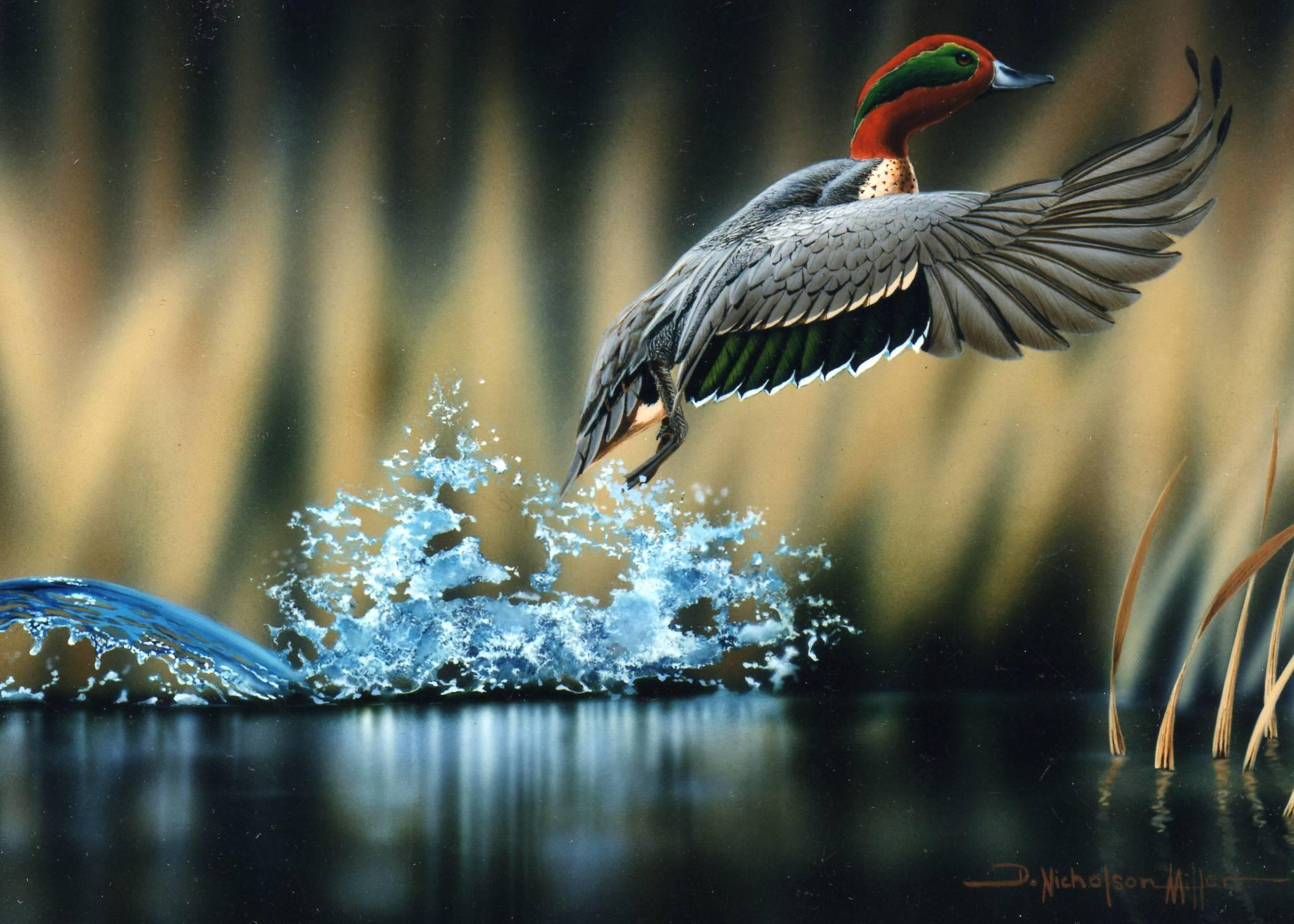 Wildlife Photography Wallpapers Top Free Wildlife Photography Backgrounds Wallpaperaccess