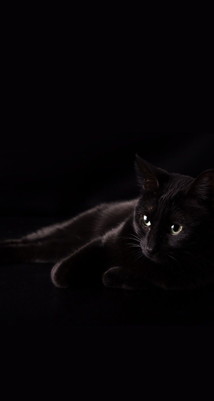 Black Cat Iphone Wallpapers Top Free Black Cat Iphone Backgrounds Wallpaperaccess
