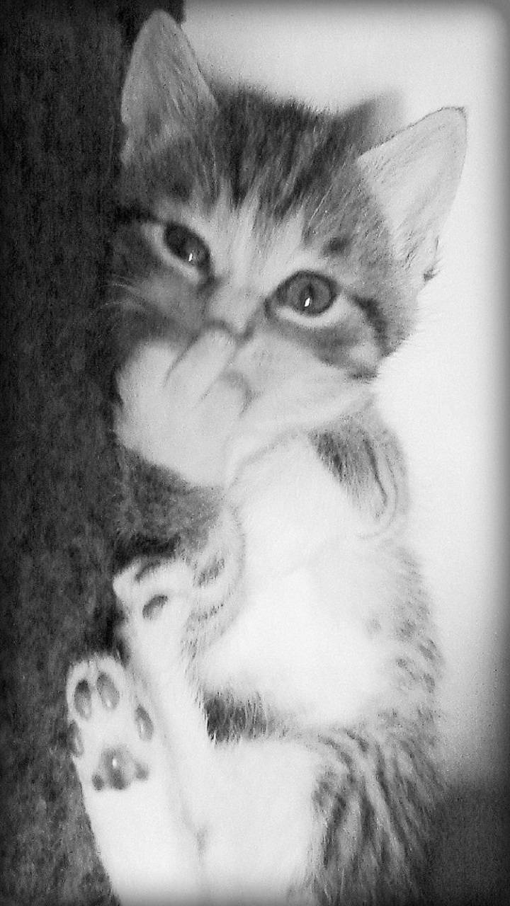 Cat Showing Middle Finger Wallpapers - Top Free Cat ...