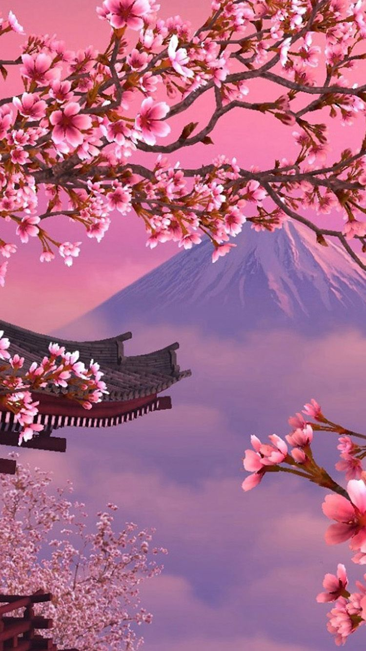 Japanese Cherry Blossom Iphone Wallpapers Top Free