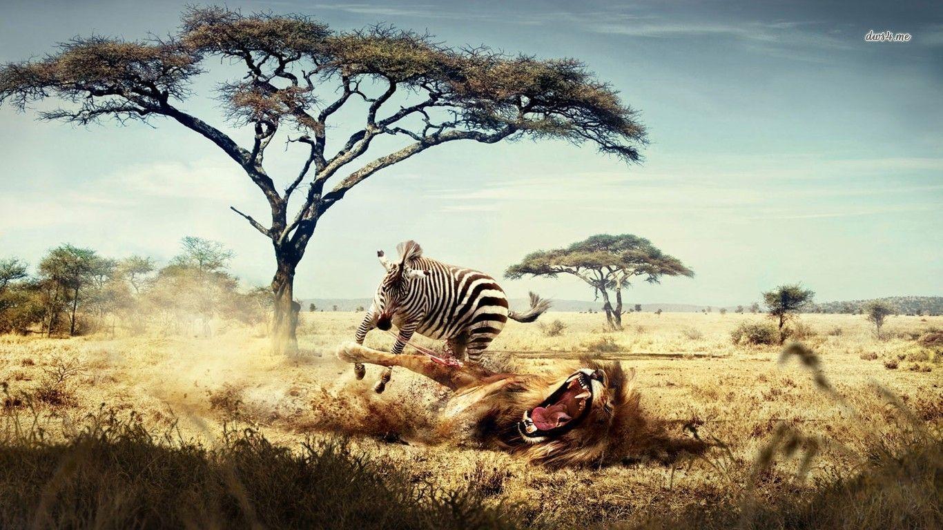 Wildlife Wallpapers Top Free Wildlife Backgrounds Wallpaperaccess