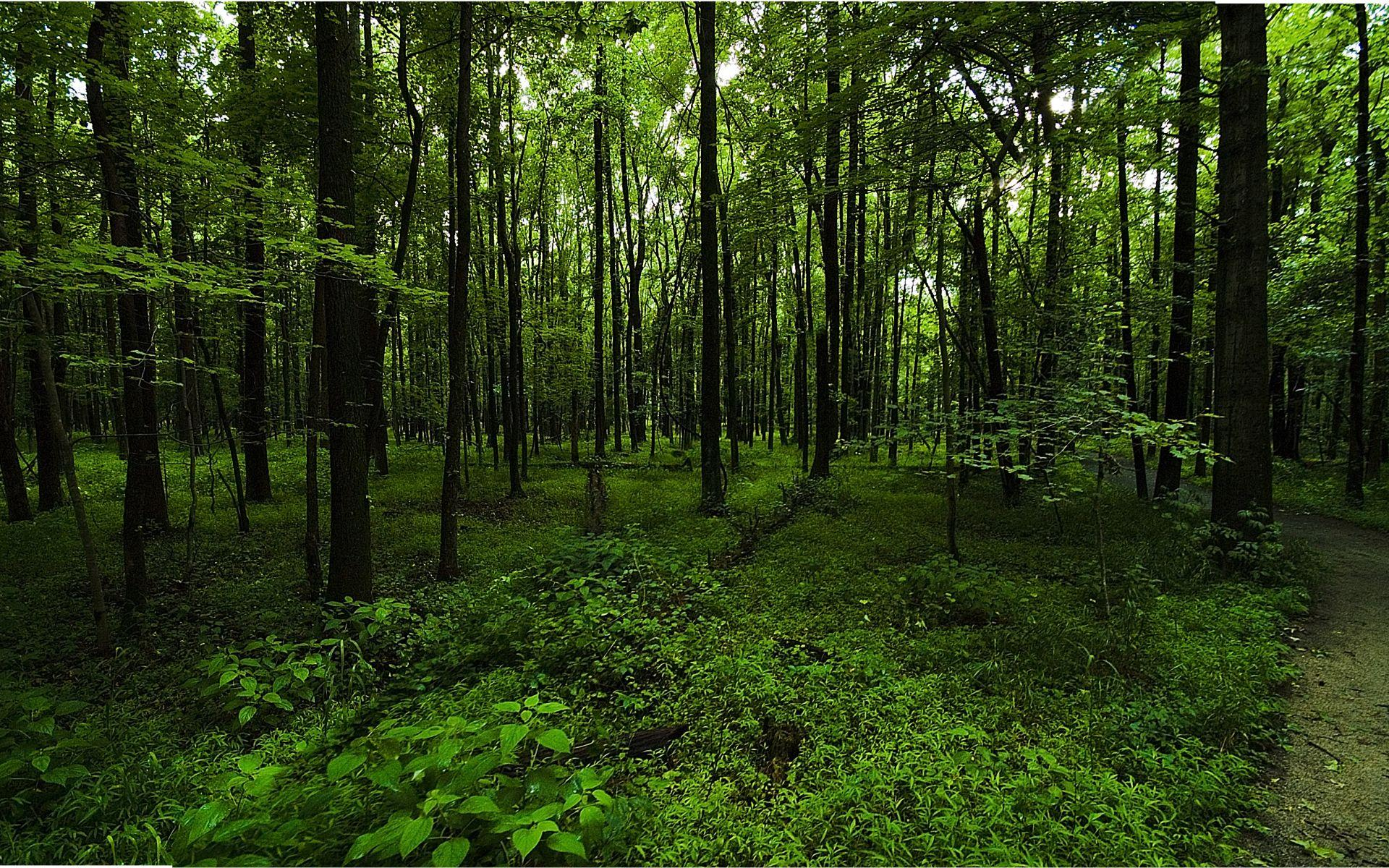 Woodland Wallpapers Top Free Woodland Backgrounds