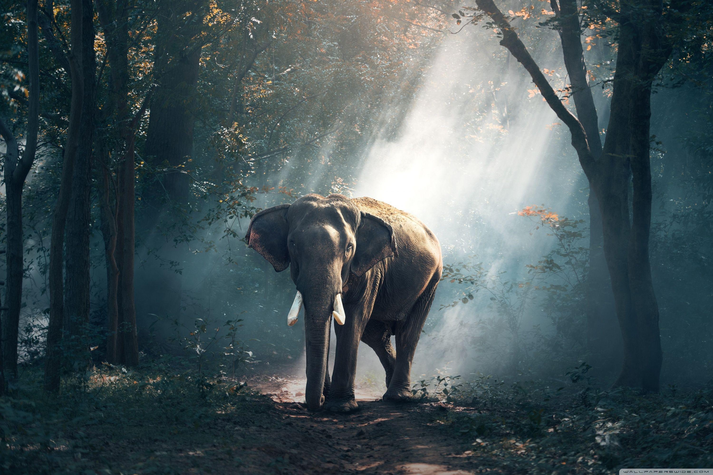 Desktop Hd Wild Animals