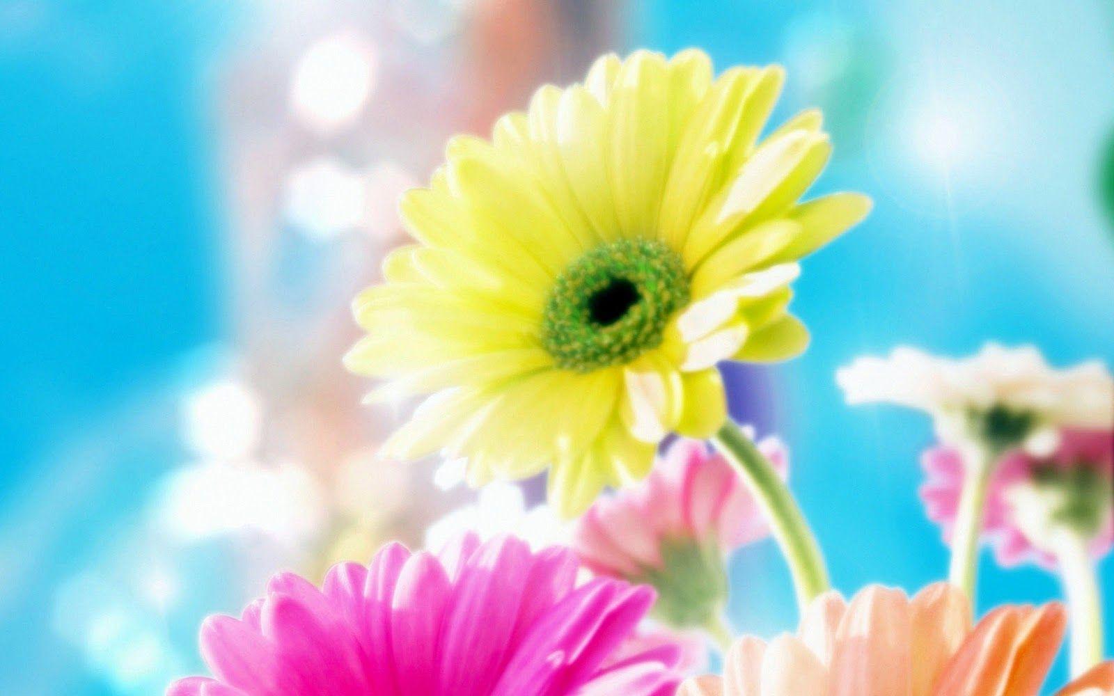 Hoa ngọt ngào 1600x1000 Thú vị: Hình nền hoa đẹp nhất