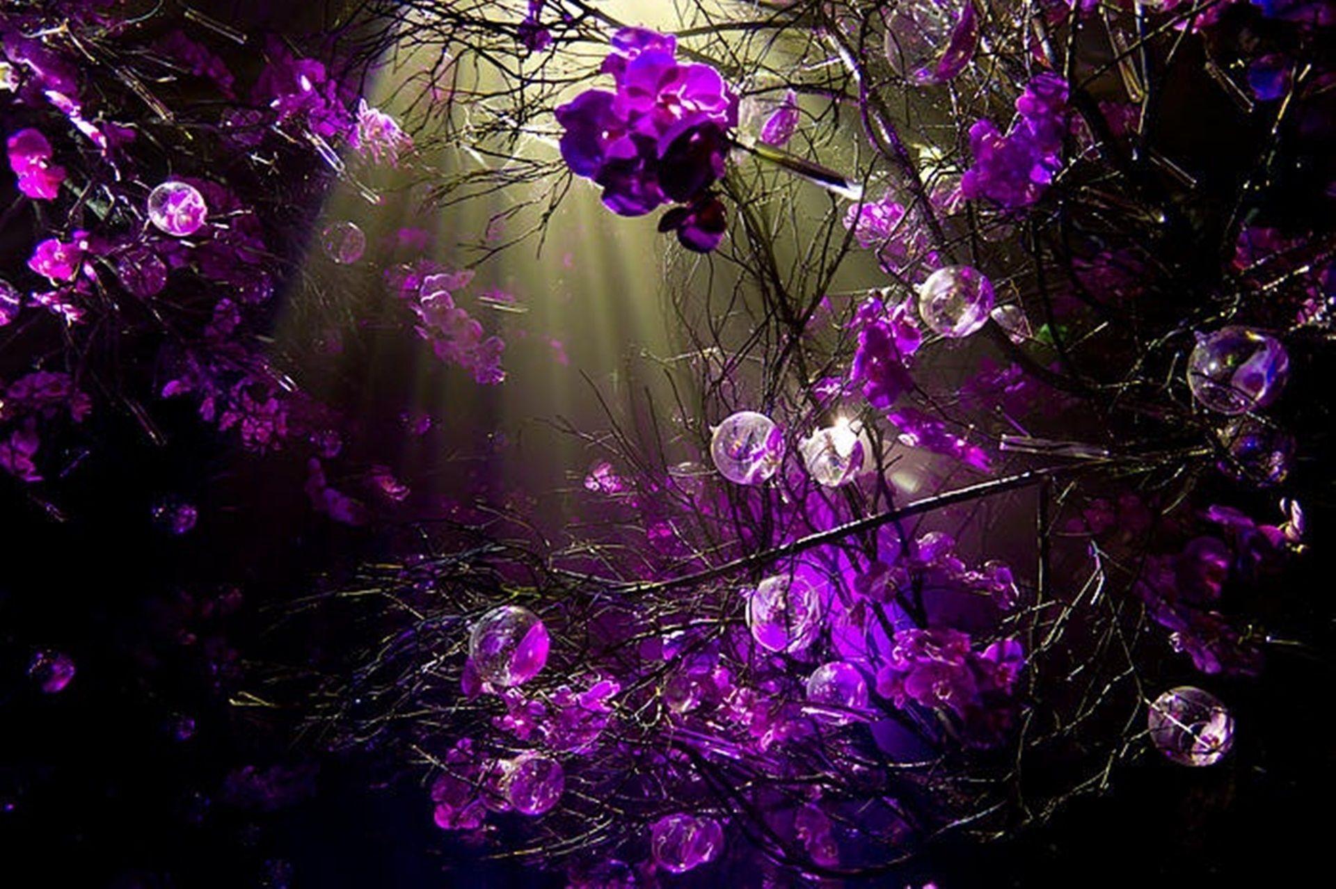 Purple Desktop Wallpapers - Top Free