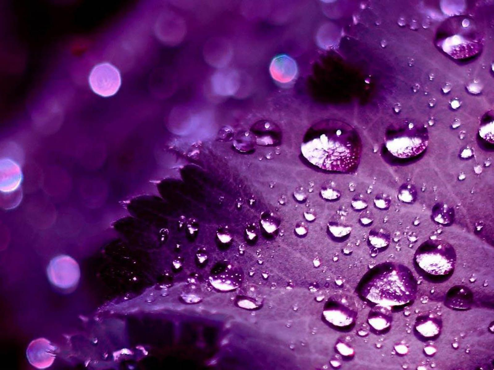 Purple Desktop Wallpapers Top Free Purple Desktop