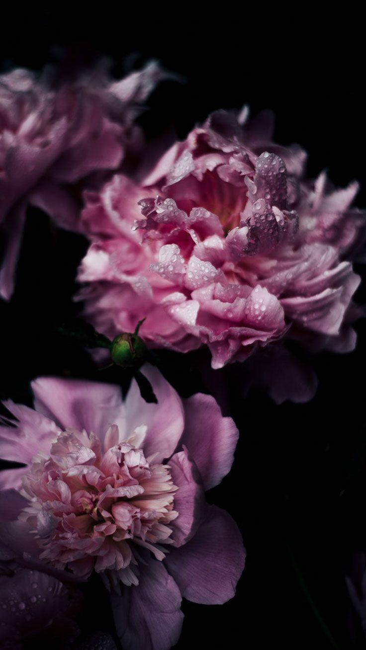 69 best free flower iphone wallpapers wallpaperaccess 744x1392 mightylinksfo