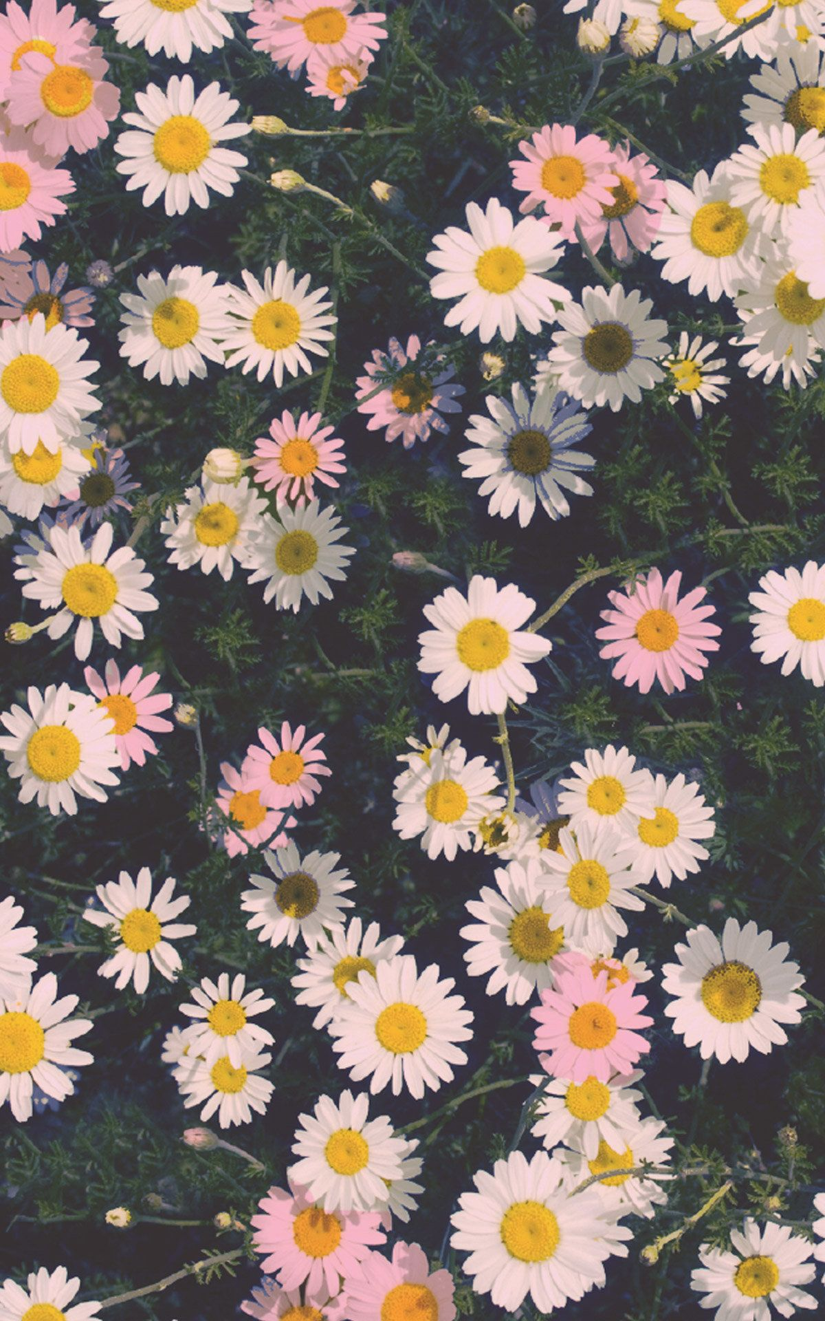 Floral Iphone Wallpapers Top Free Floral Iphone Backgrounds