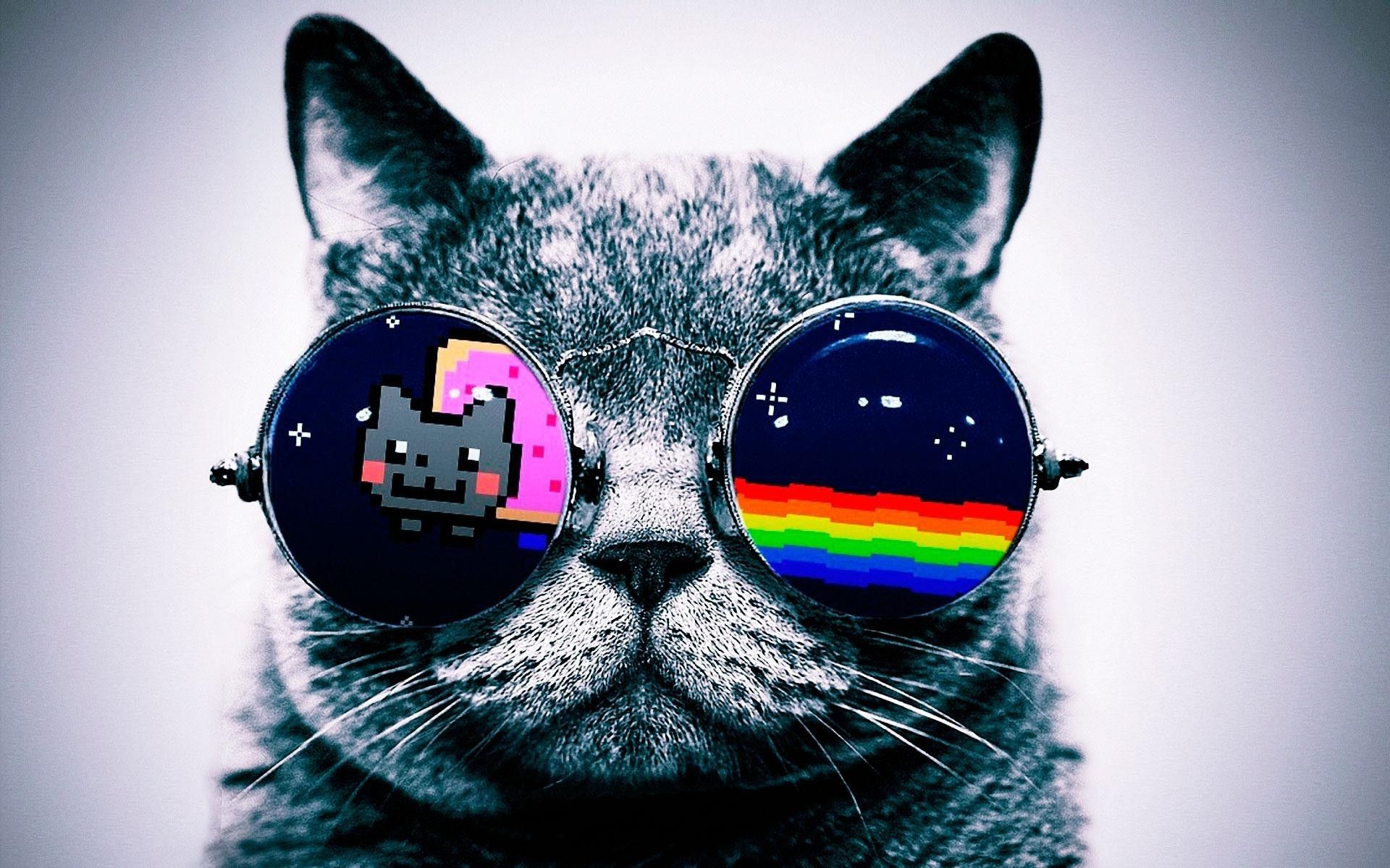 2560x1480 Cool Cat With Glasses Wallpaper