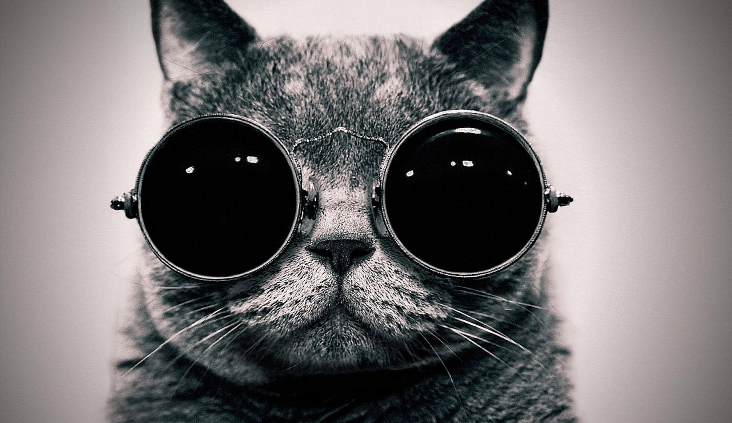 Cat With Glasses Wallpapers Top Free Cat With Glasses Backgrounds Wallpaperaccess