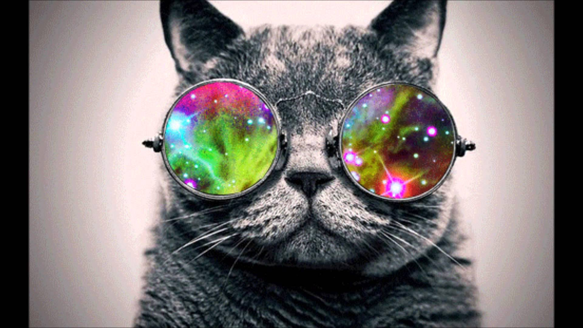 31 Best Free Cat With Glasses Wallpapers Wallpaperaccess