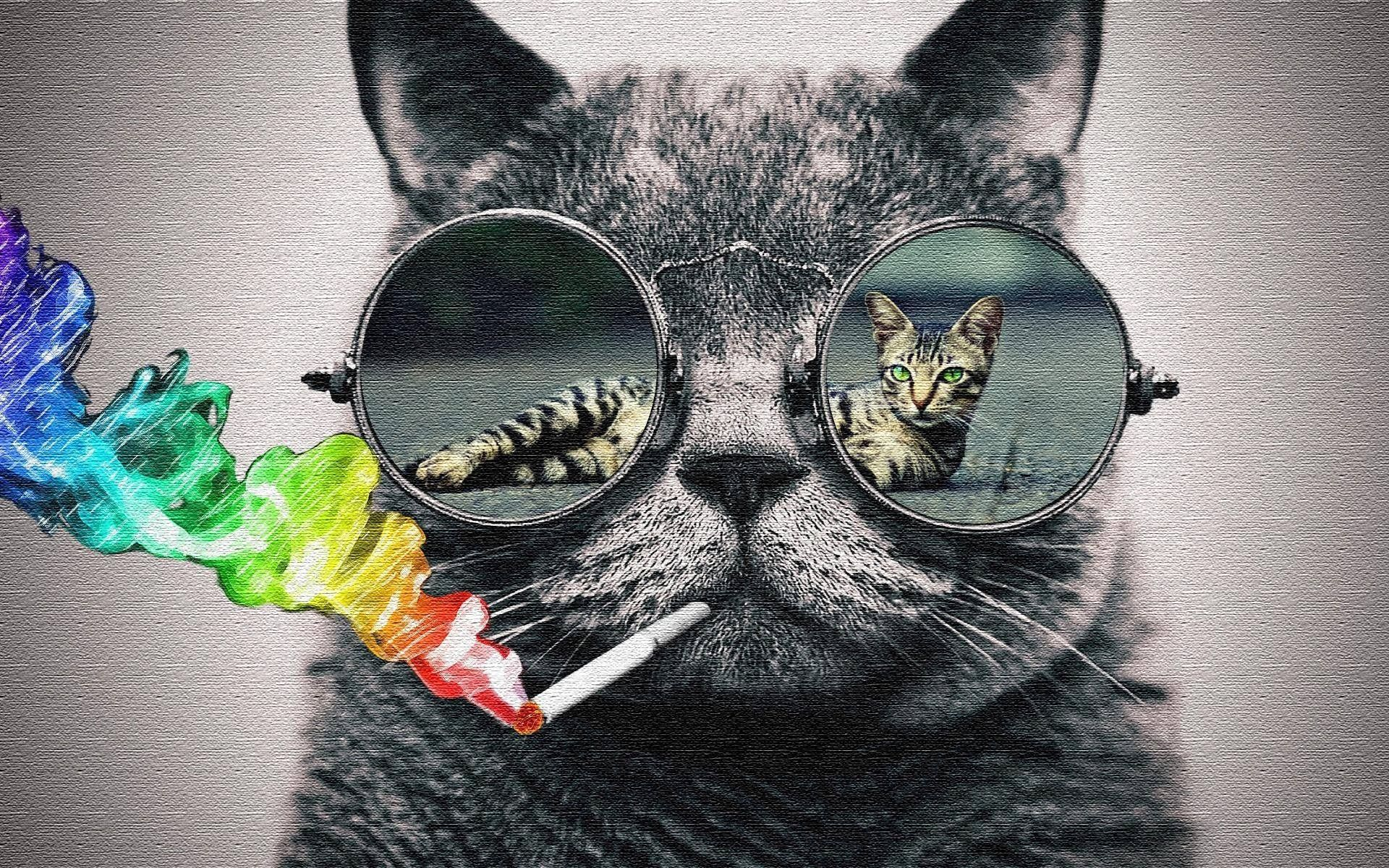 1920x1200 Cat With Glasses