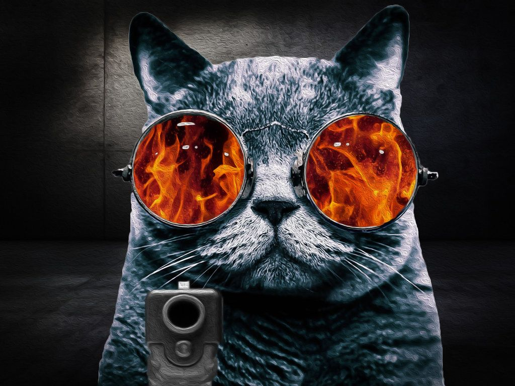 37 Best Free Cat With Glasses Wallpapers Wallpaperaccess