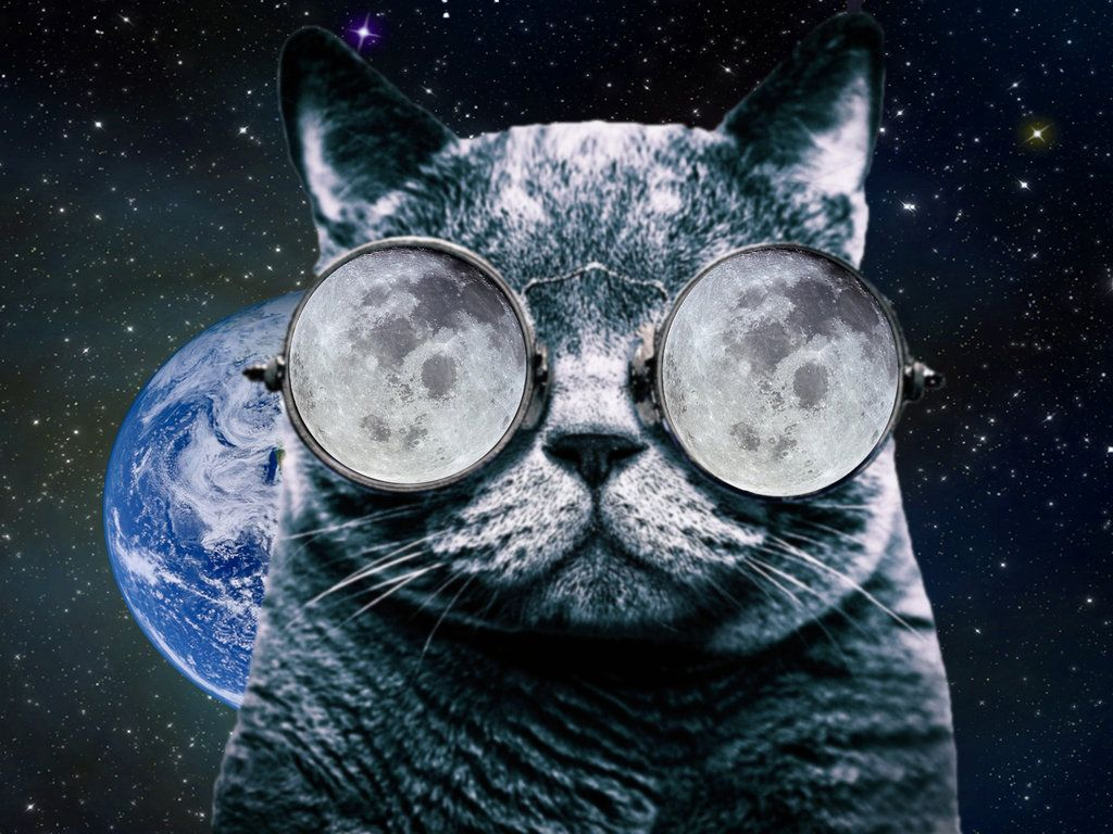 Cat With Glasses Wallpapers Top Free Cat With Glasses