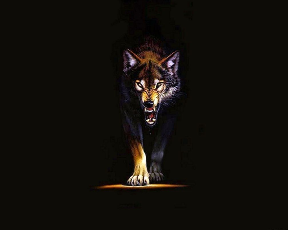 Wild Wolf Wallpapers Top Free Wild Wolf Backgrounds Wallpaperaccess