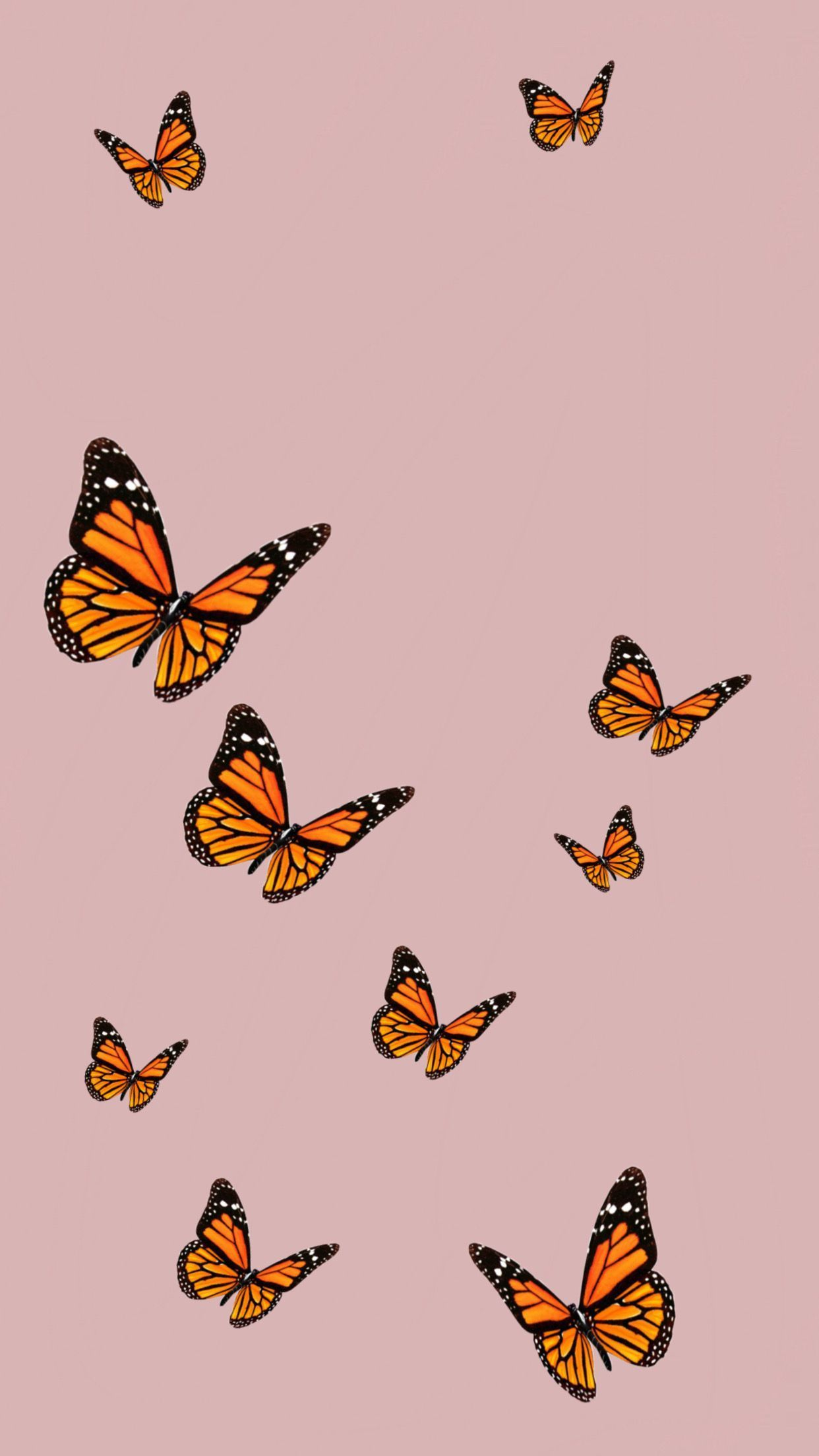 Vsco Butterfly Wallpapers Top Free Vsco Butterfly Backgrounds