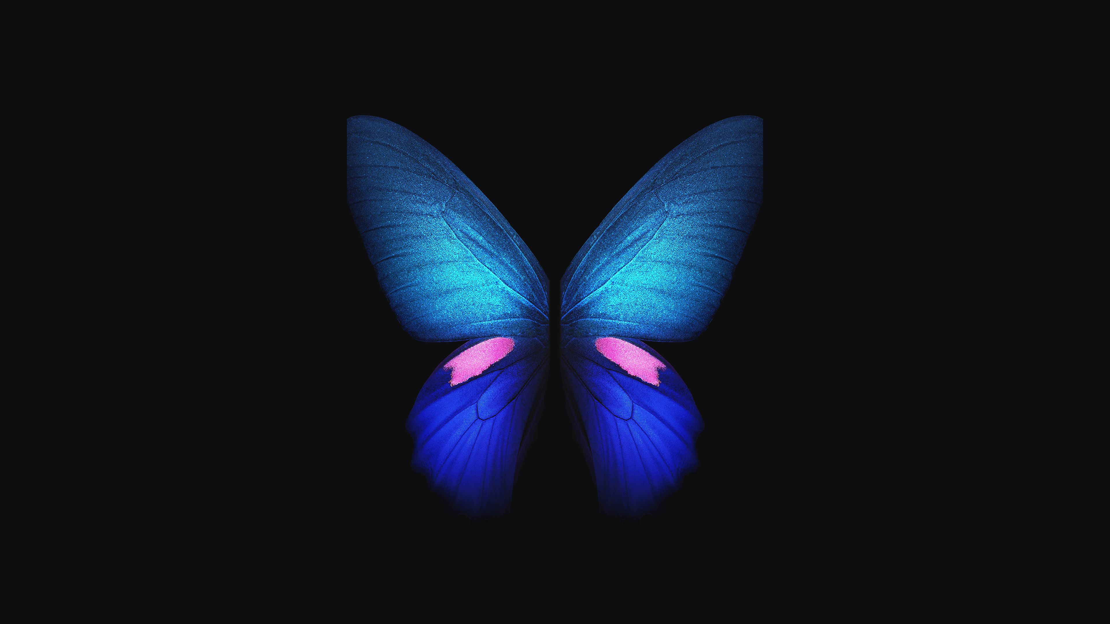 Butterfly 4k Wallpapers Top Free Butterfly 4k Backgrounds Wallpaperaccess