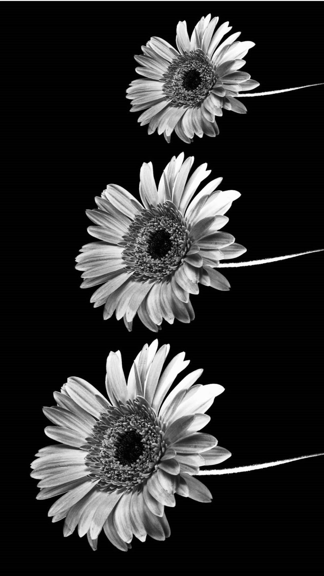 Black And White Tumblr Iphone Wallpapers Top Free Black And White Tumblr Iphone Backgrounds Wallpaperaccess